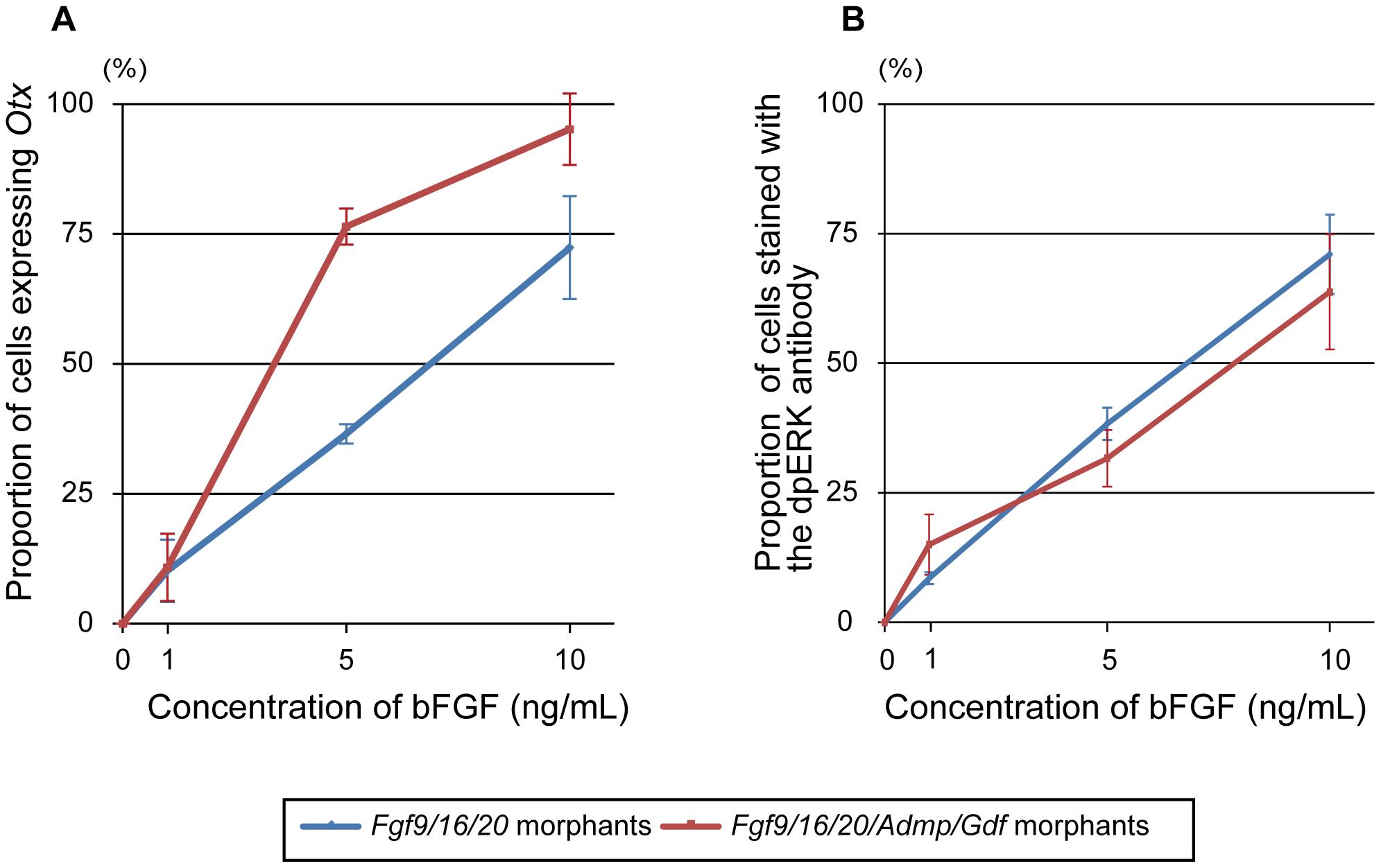 <i>Fgf9/16/20/Admp/Gdf1/3-like</i> morphants respond more sensitively to human bFGF than <i>Fgf9/16/20</i> morphants.