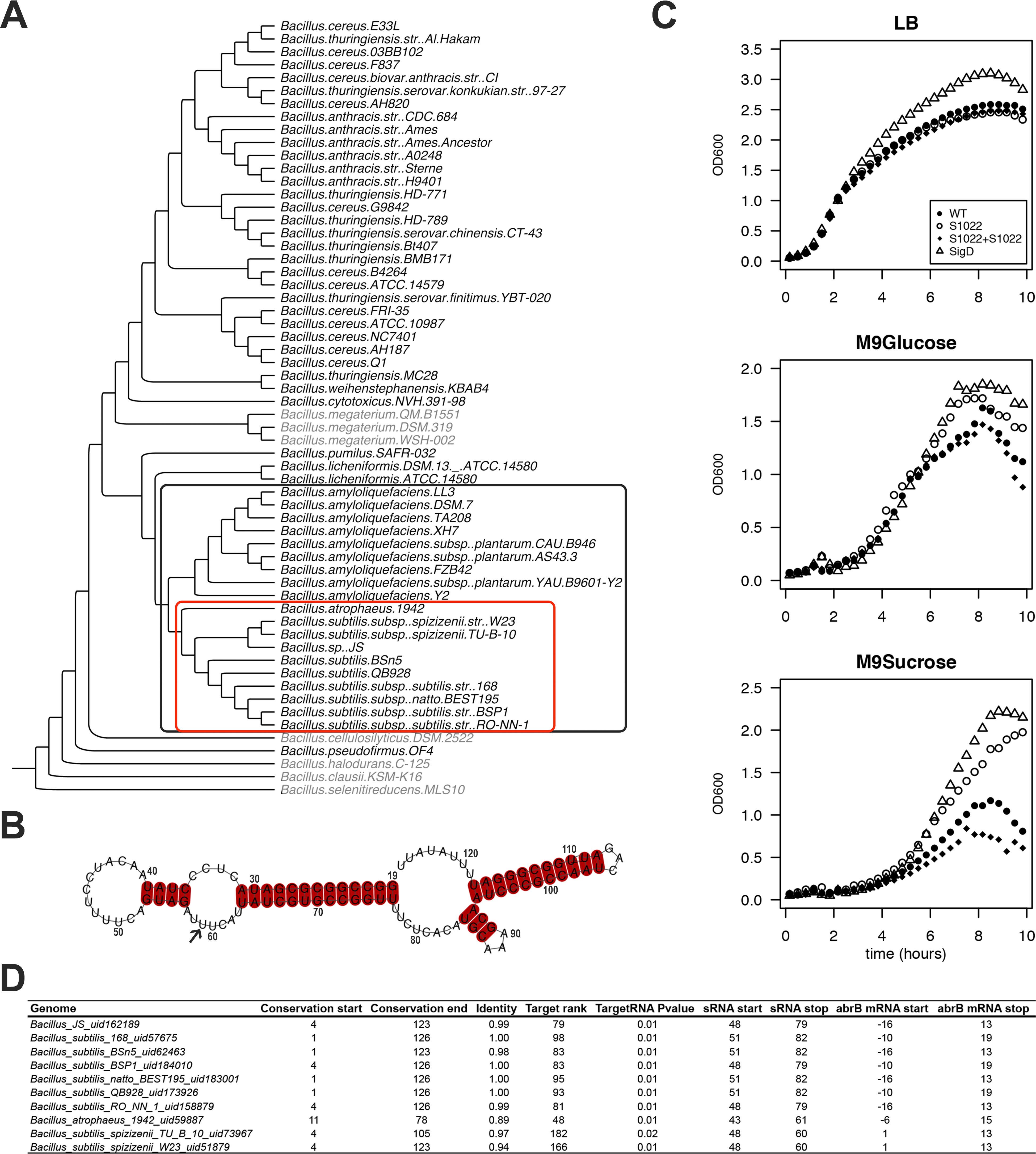 The RnaC/S1022 growth phenotype is linked to the evolutionary target prediction of abrB.