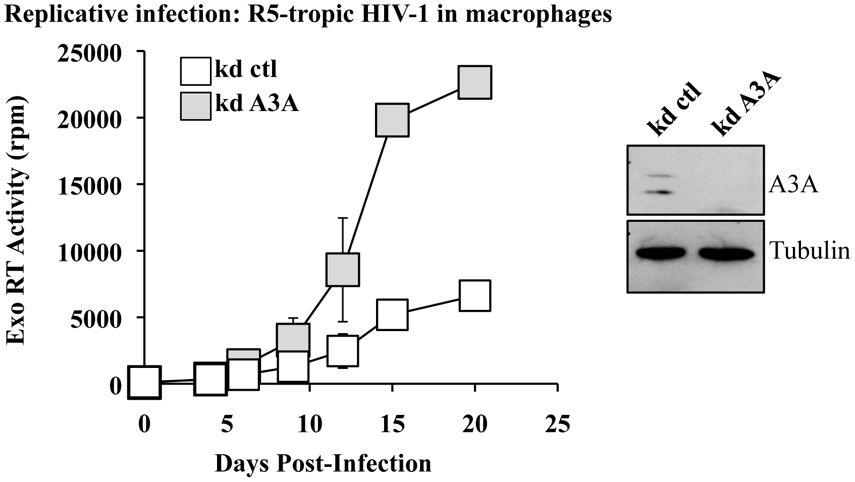A3A silencing increases viral spread of an R5 tropic HIV-1 virus in macrophages.