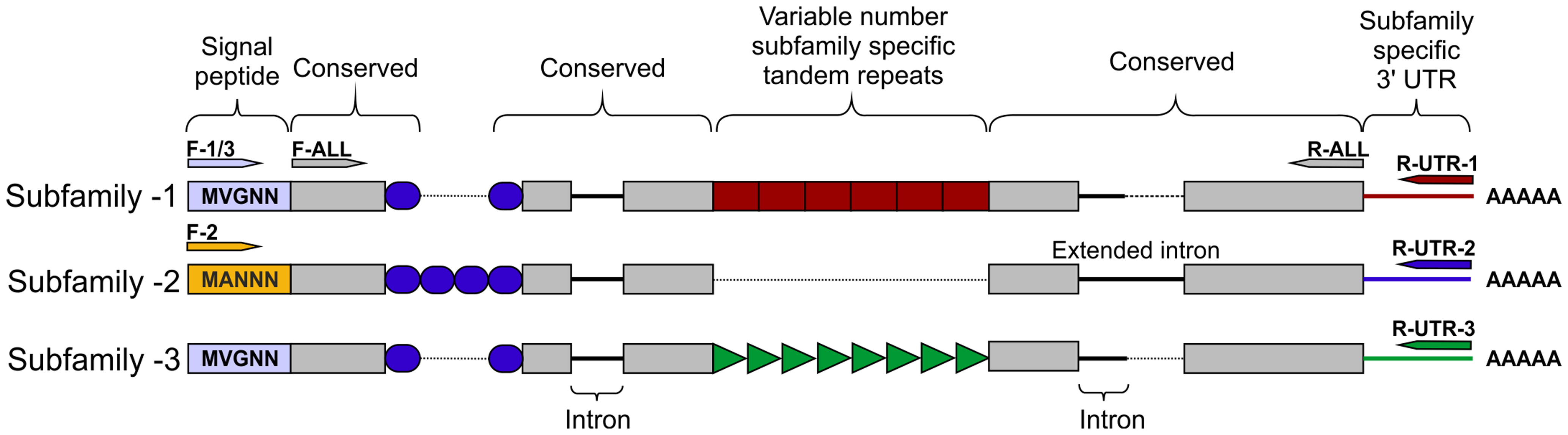 HYP effector gene family schematic and location of primer combinations.