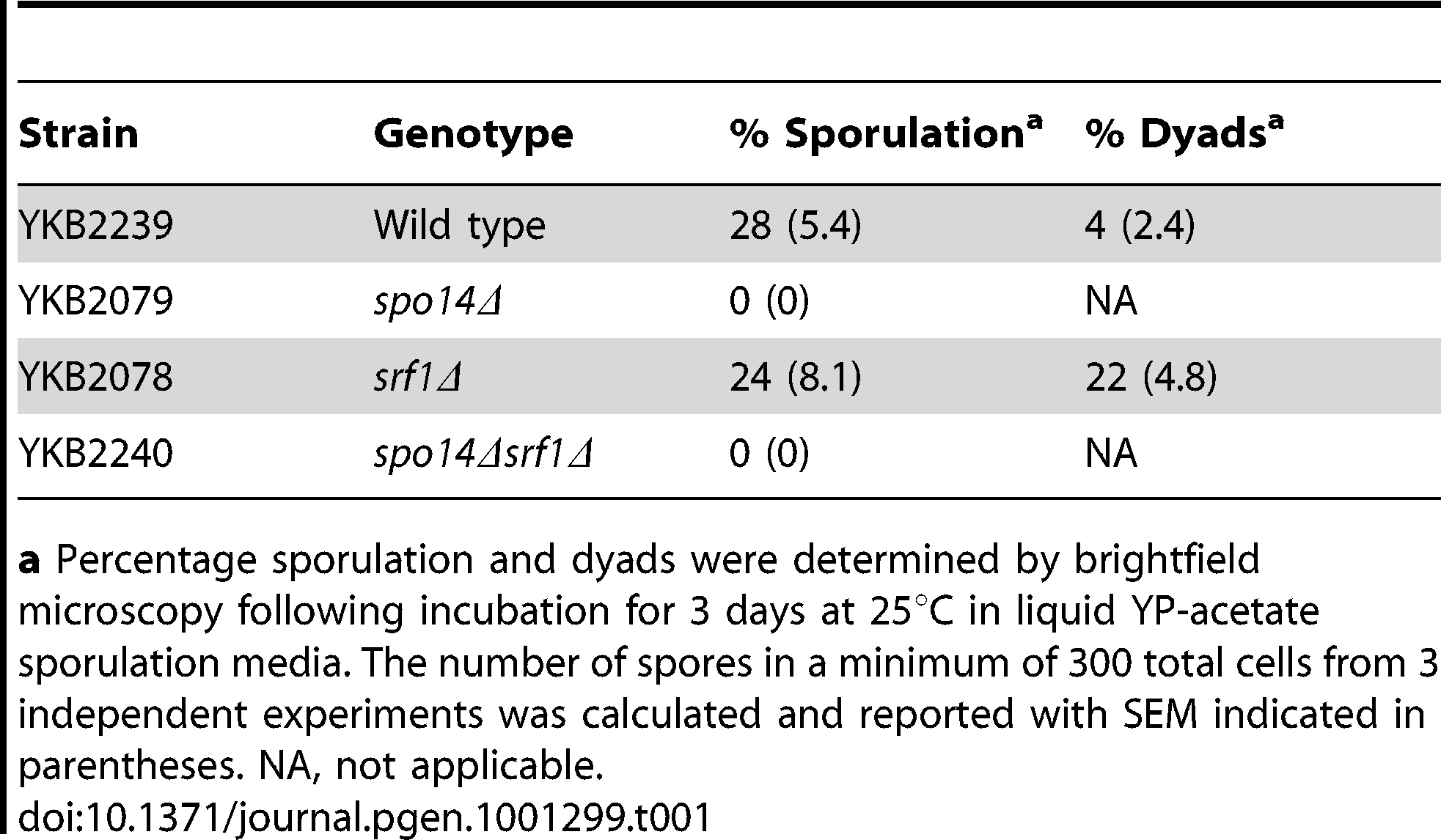Sporulation efficiency of <i>srf1Δ</i> cells.