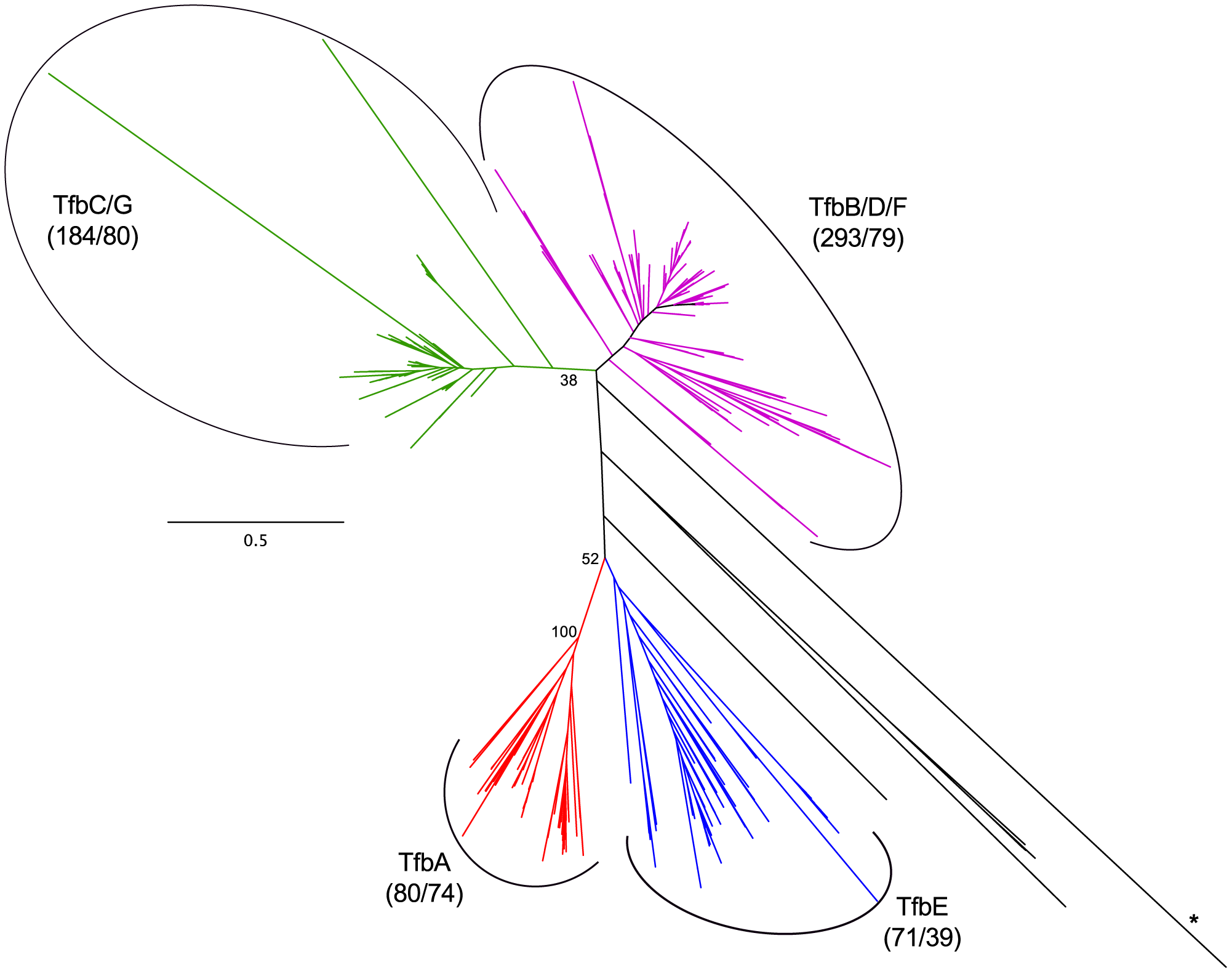 Haloarchaeal transcription factor B phylogeny.