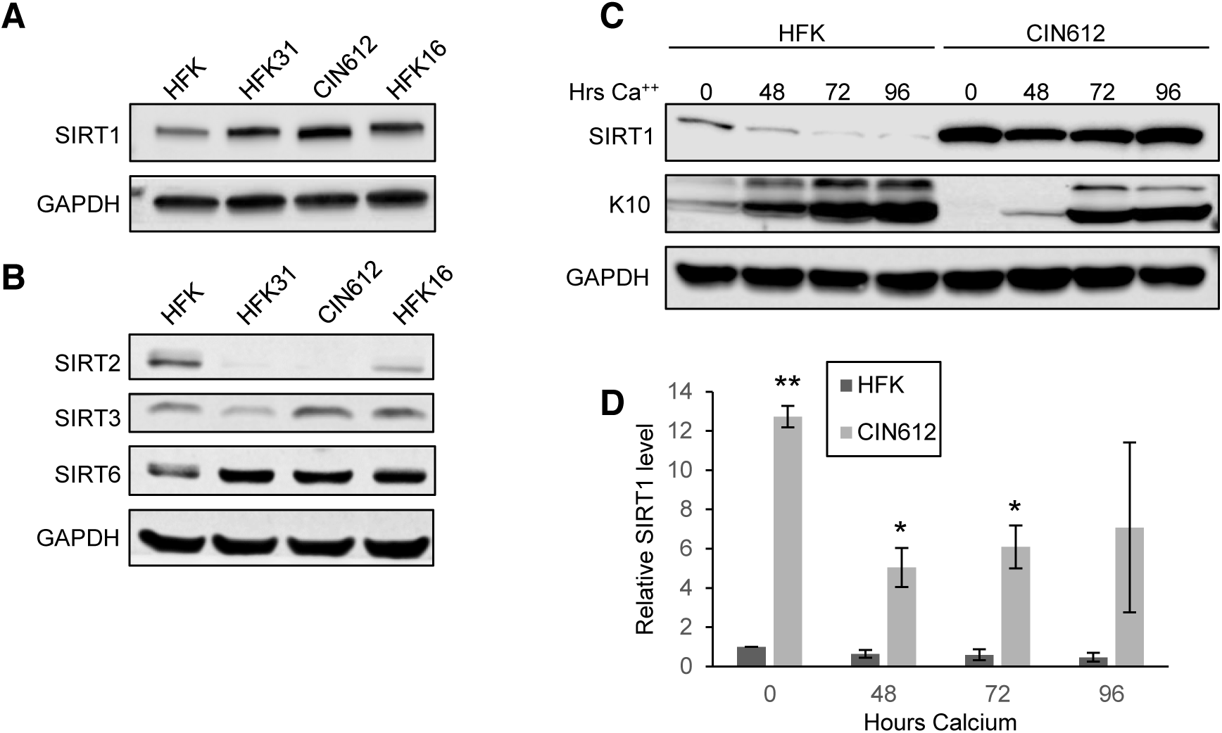 HPV induces overexpression of SIRT1 throughout keratinocyte differentiation.