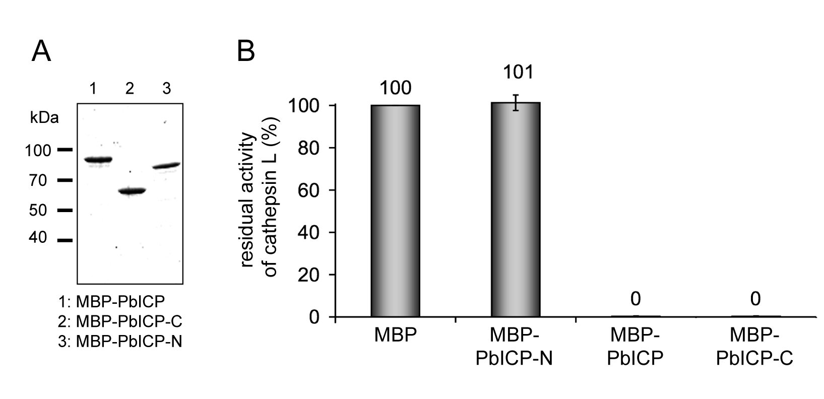 The C-terminal domain of PbICP is necessary and sufficient for the inhibitor function.