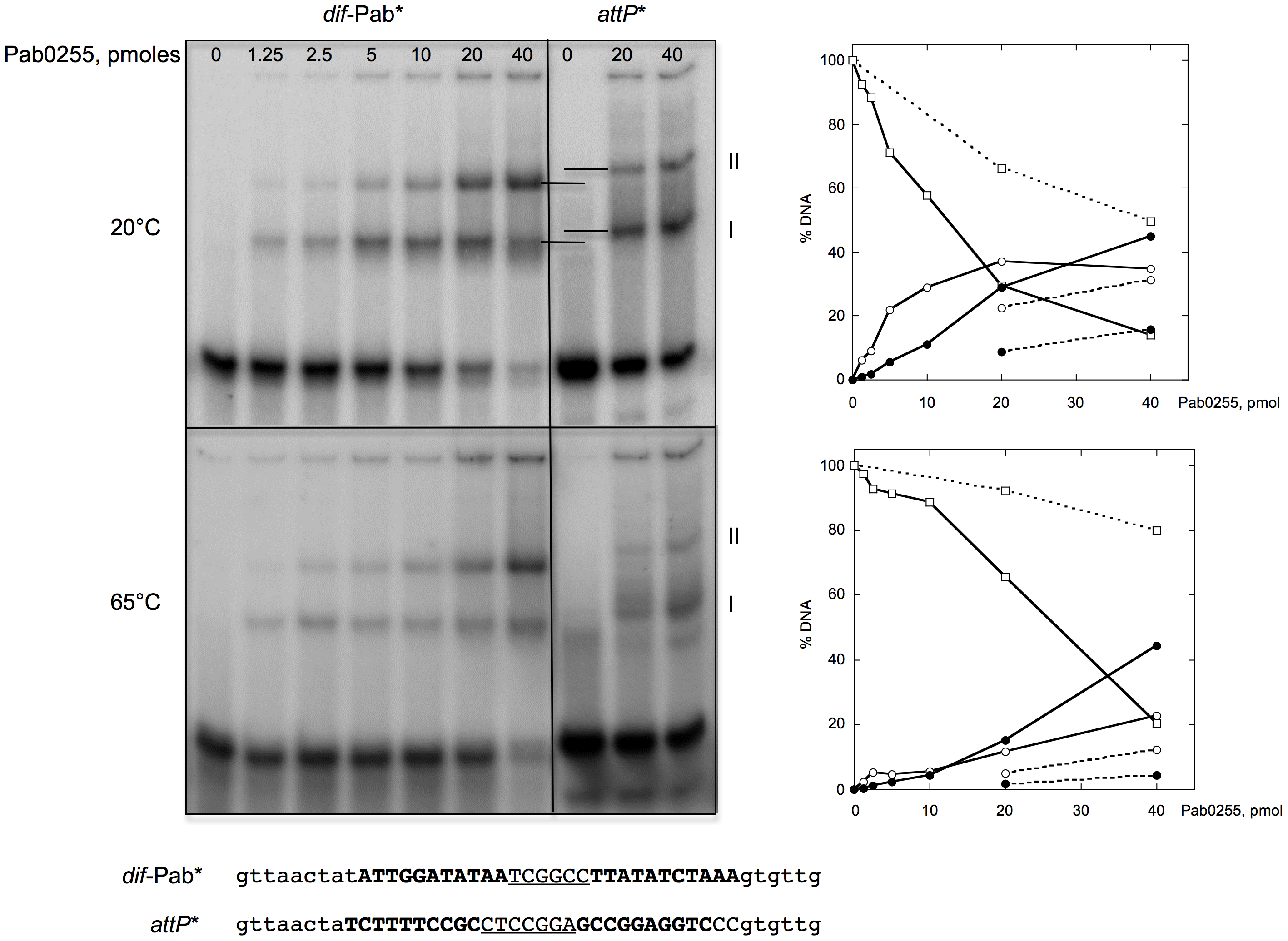 Binding of <i>P. abyssi</i> XerA to specific and non-specific DNA substrates.