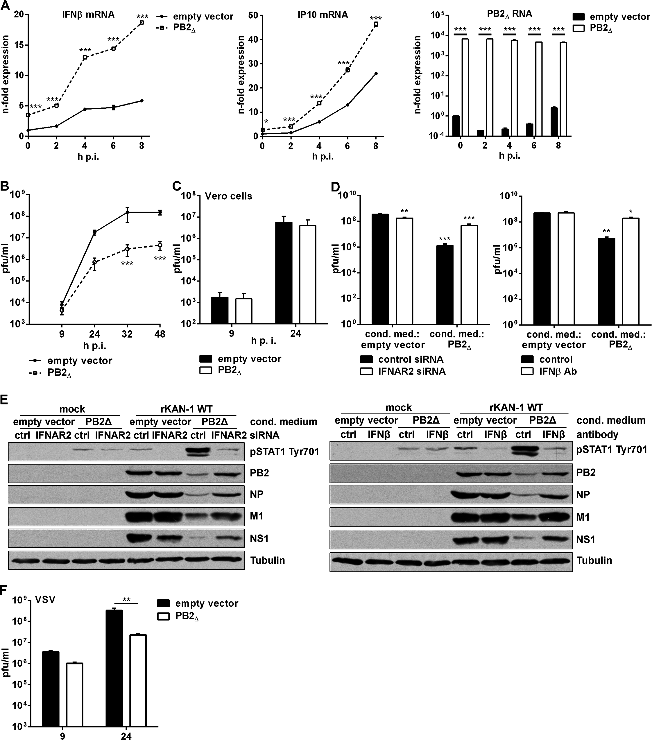 PB2<sub>∆</sub> increases virus-induced expression of IFNβ, thereby restricting viral replication of IFN-sensitive viruses.