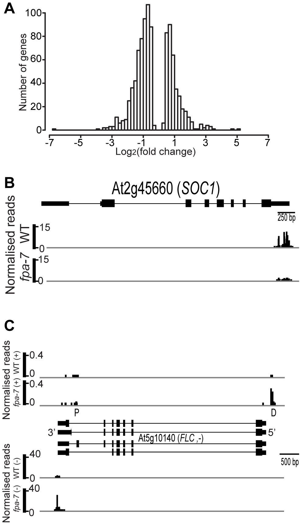 Differentially expressed genes between wild-type and <i>fpa-7</i>.