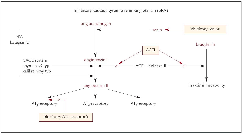 Schéma. Kaskáda systému renin-angiotenzin a místa účinku jednotlivých jejich blokátorů (v barevných rámečcích).