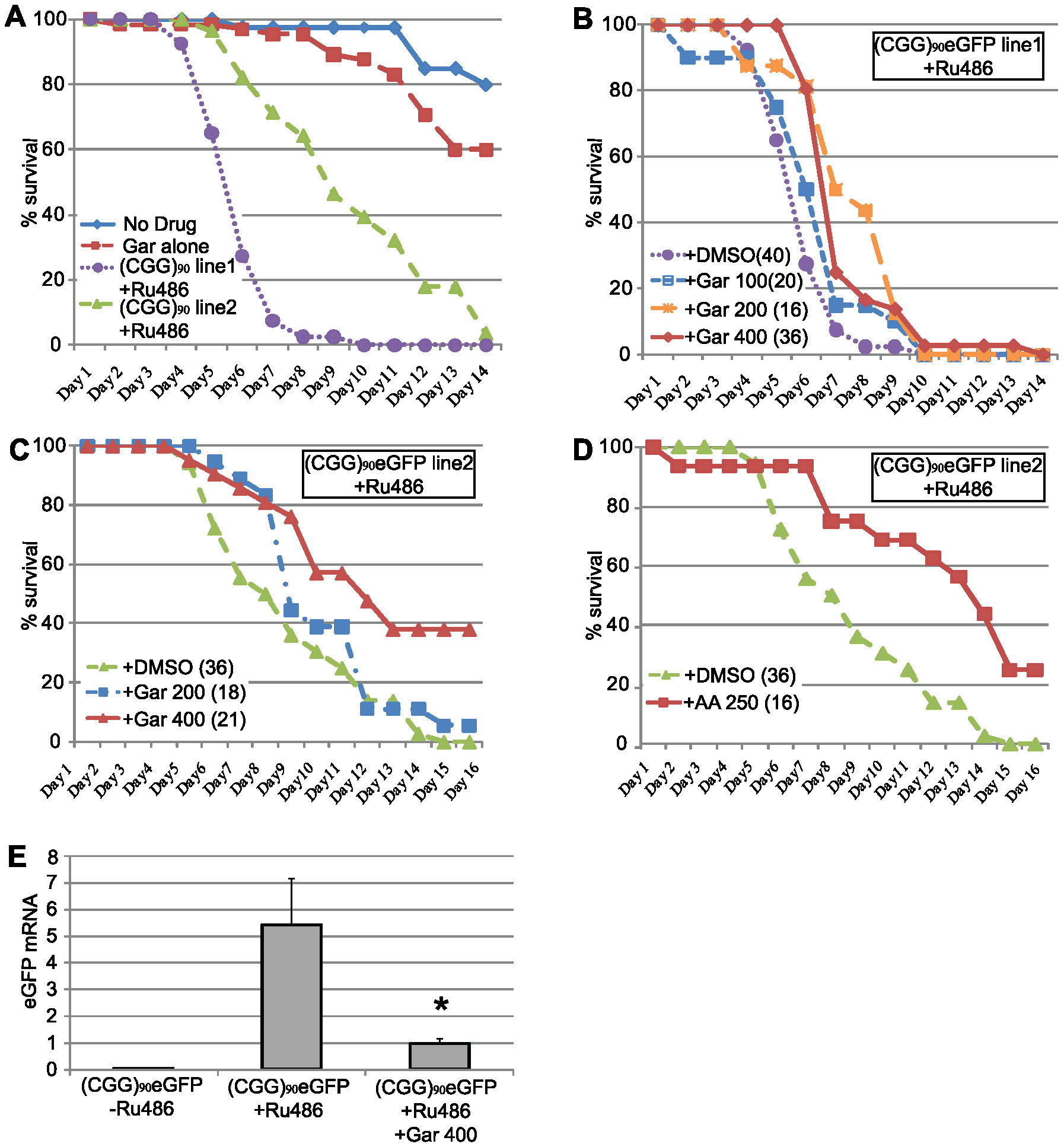HAT inhibitors extend lifespan in adult (CGG)<sub>90</sub>-eGFP flies.