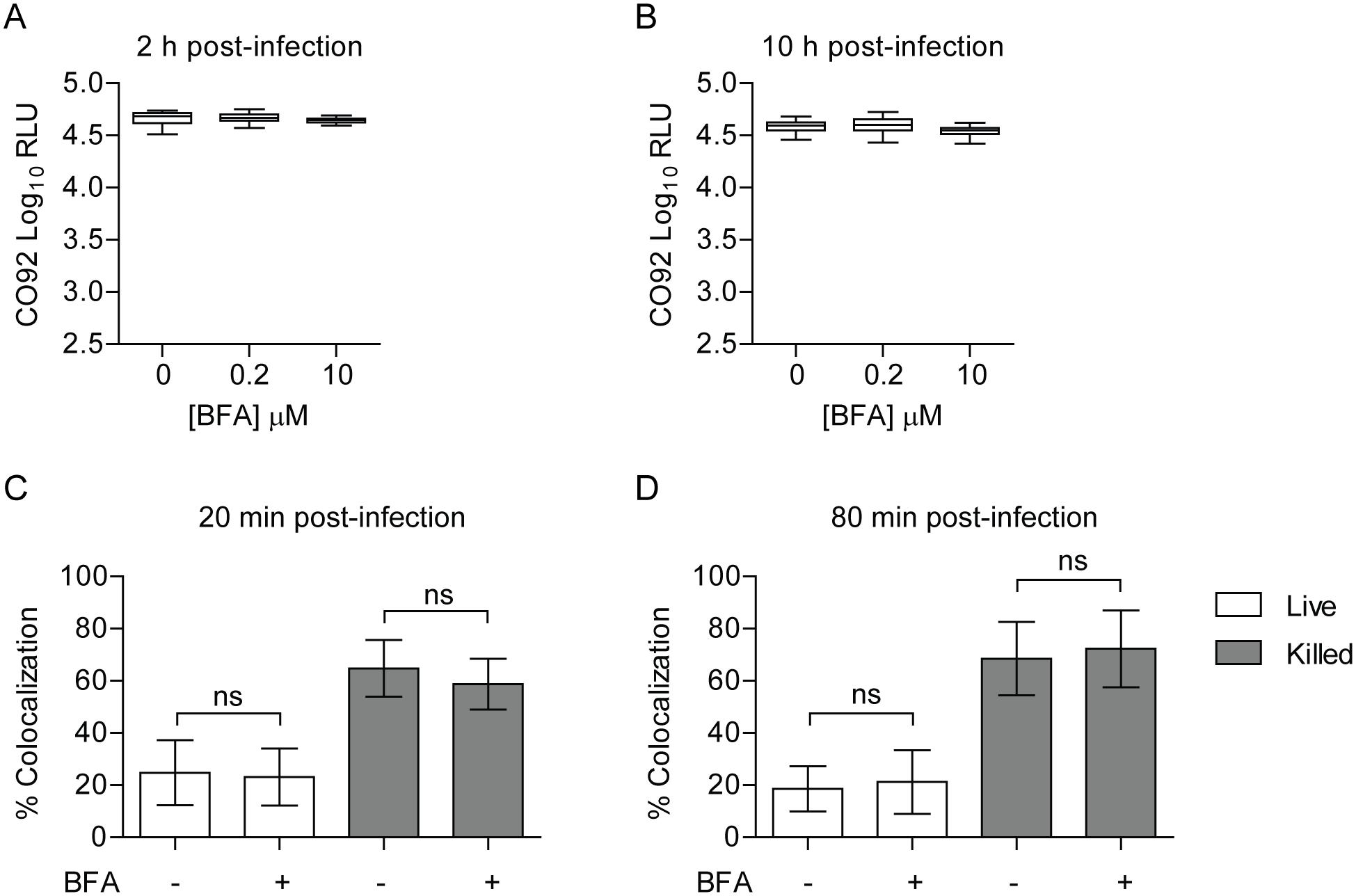 Inhibition of the secretory pathway does not inhibit <i>Y</i>. <i>pestis</i> intracellular survival.