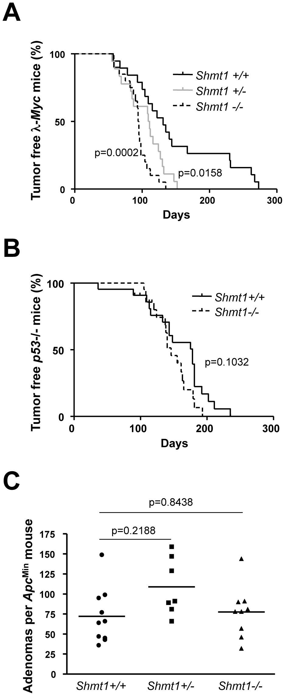 <i>Shmt1</i> loss accelerates lymphomagenesis in λ-<i>Myc</i> transgenic mice.