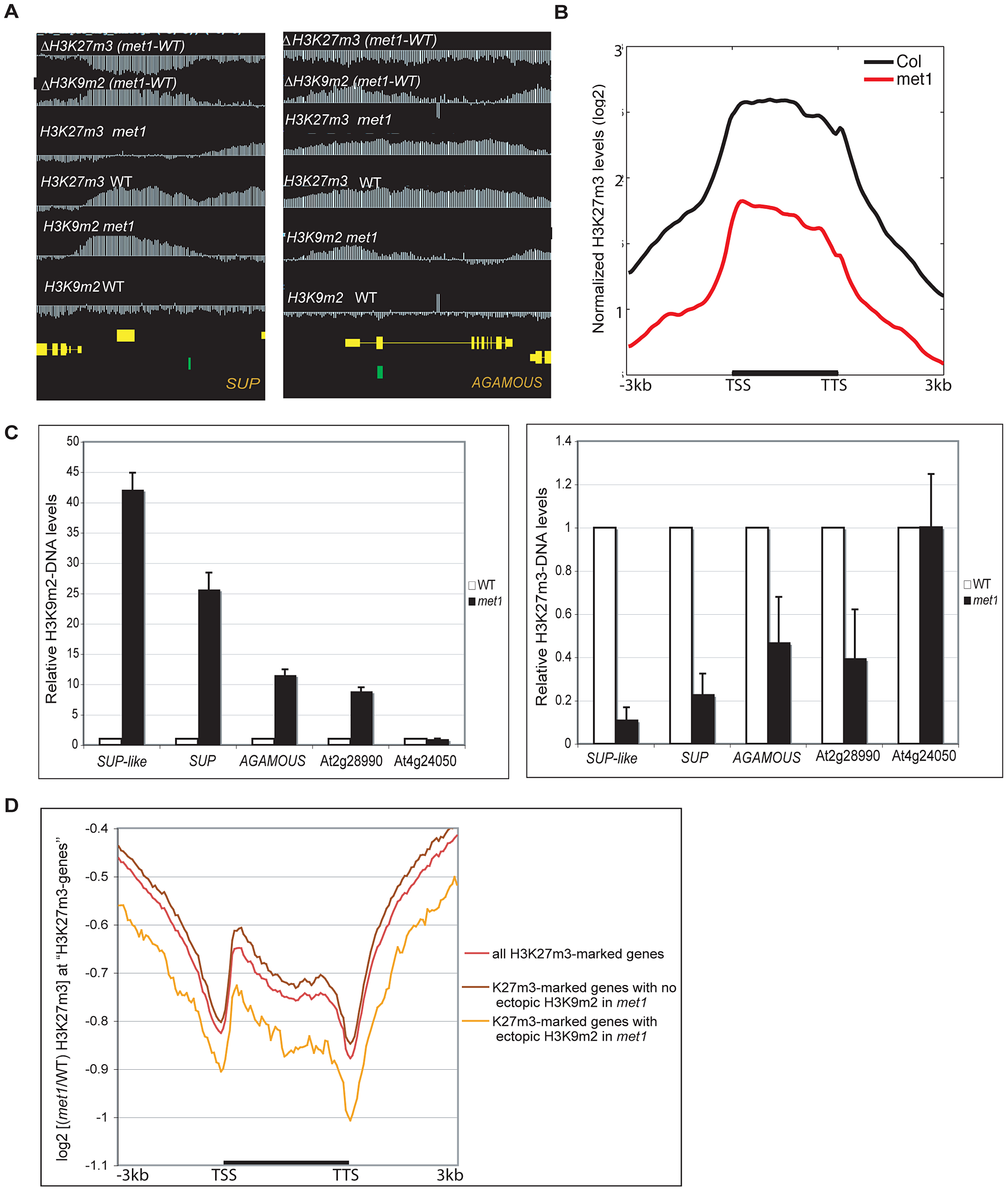 Gain of ectopic H3K9 dimethylation at PcG targets is associated with loss of H3K27m3 in <i>met1</i>.