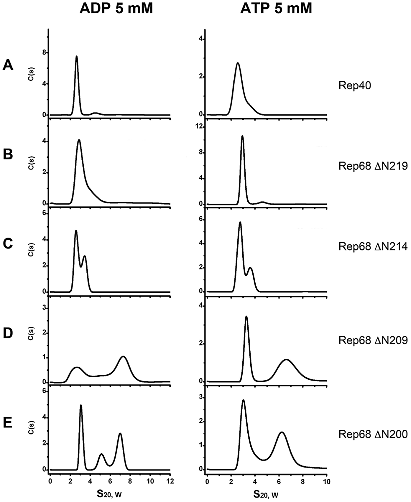 Effect of nucleotides in the oligomerization of Rep extended-linker construct proteins.