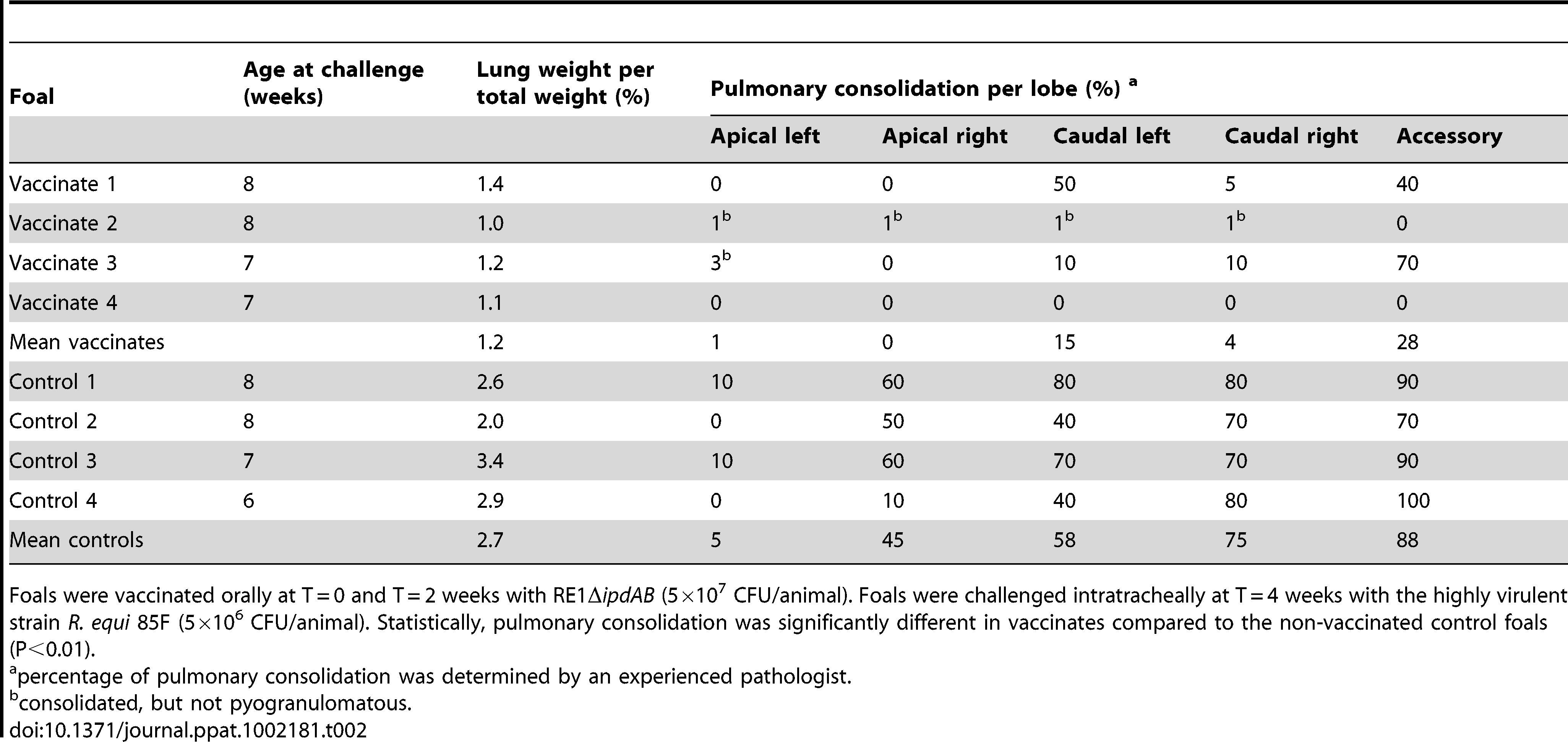 Lung weights and percentage pulmonary consolidation per lobe of vaccinated and unvaccinated (control) 2 to 4-week-old foals (n=4).