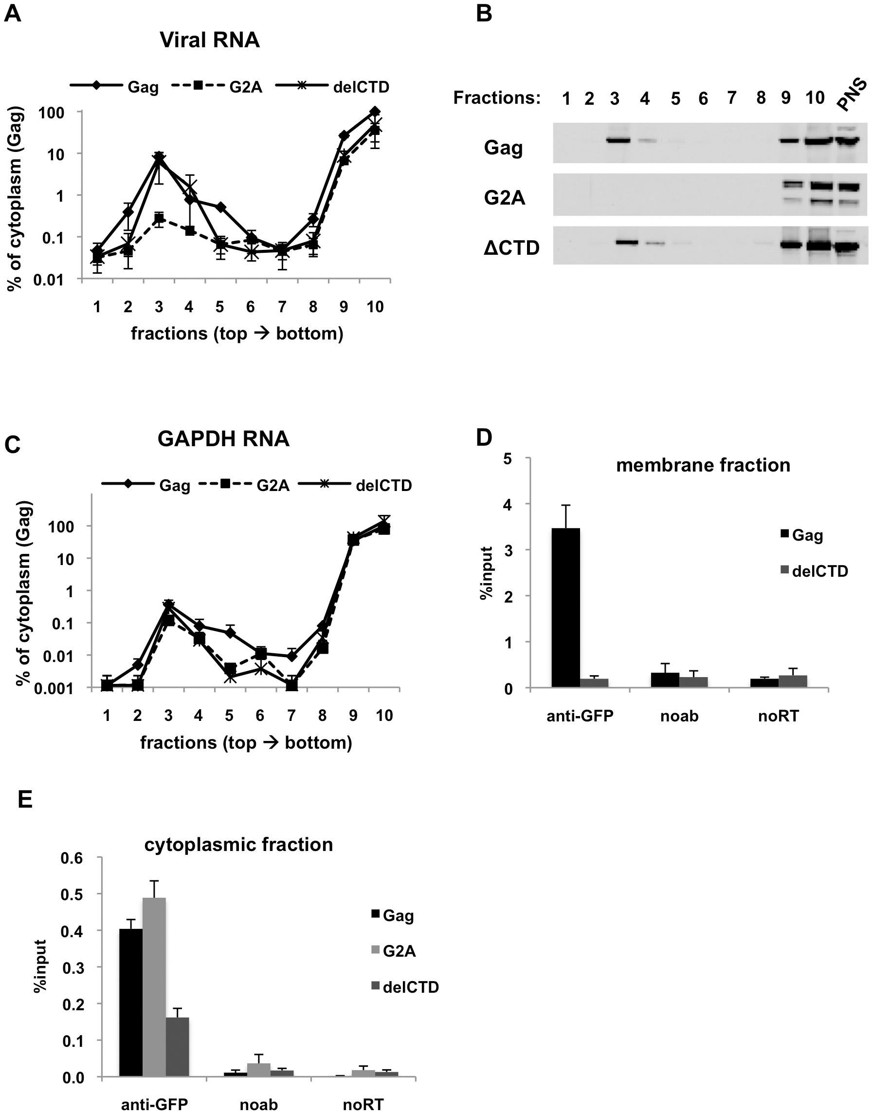 Immunoprecipitation of HIV genomic RNA from membrane and cytoplasmic fractions by Gag, G2A-Gag and Gag-delCTD.