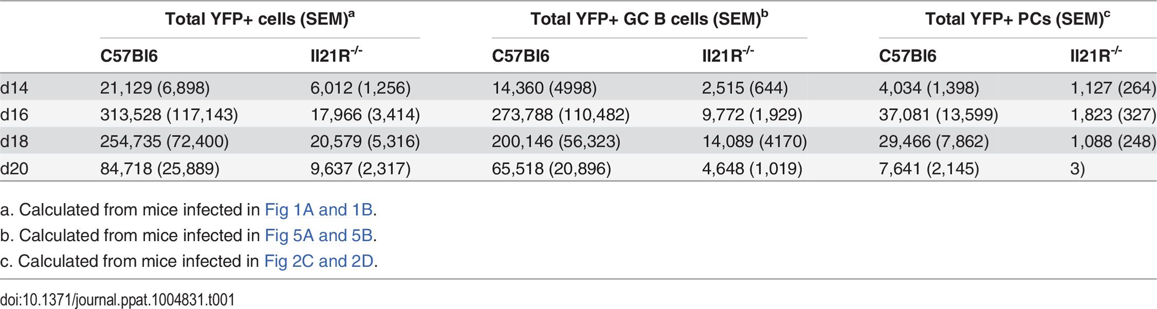 Average number of YFP<sup>+</sup> cells per spleen.