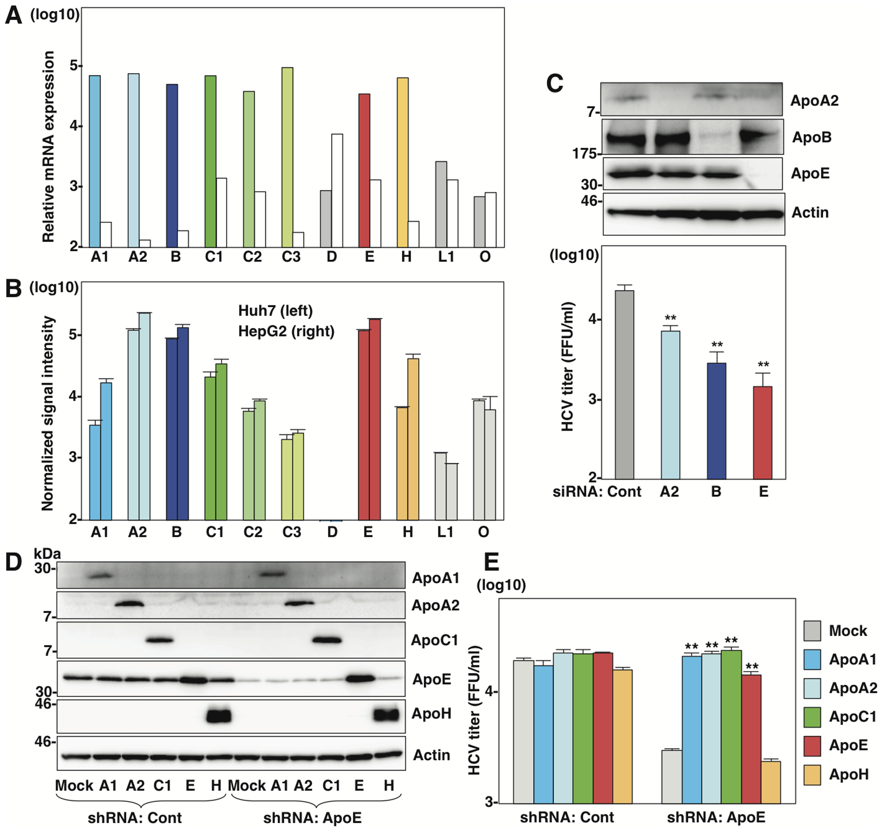 Several apolipoproteins participate in HCV propagation.