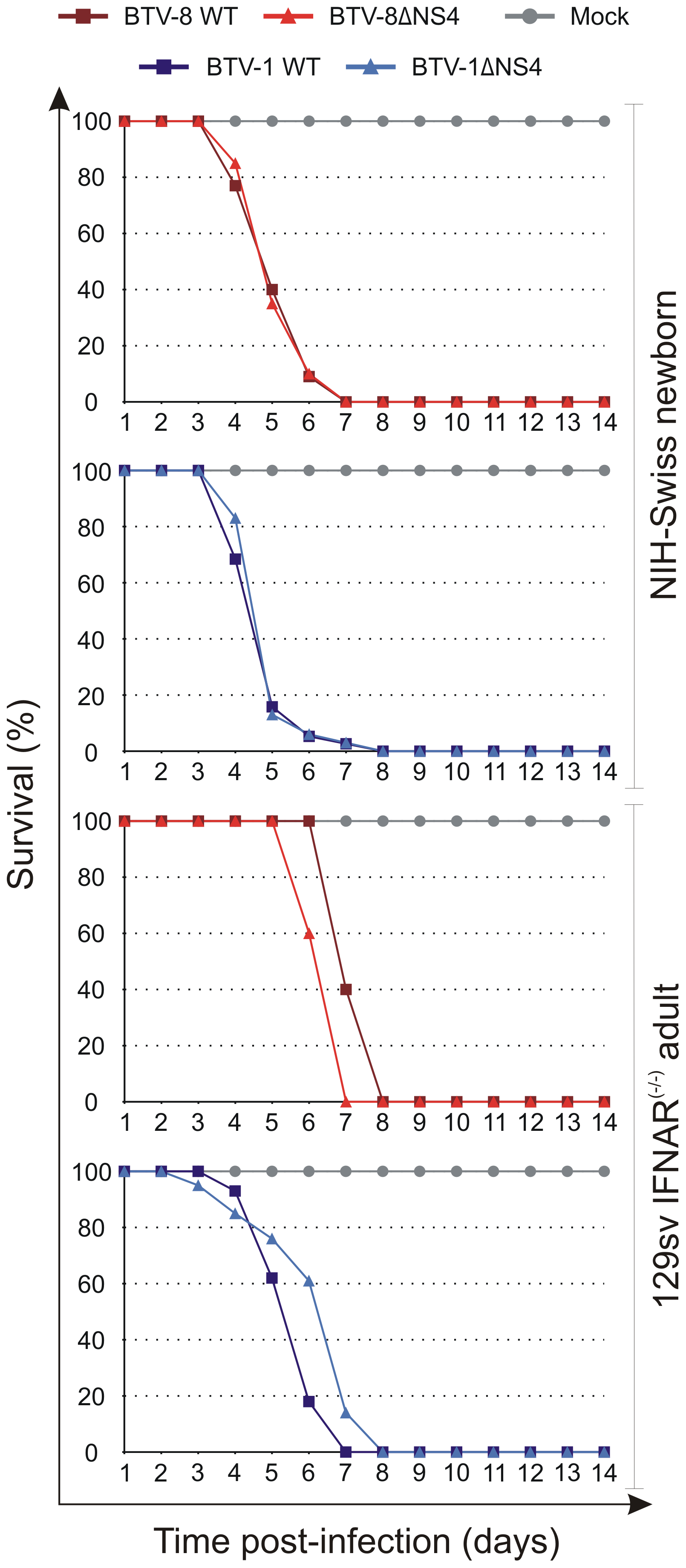 Experimental infection of Swiss new born and IFNAR<sup>(−/−)</sup> adult mice with wt and ΔNS4 viruses.