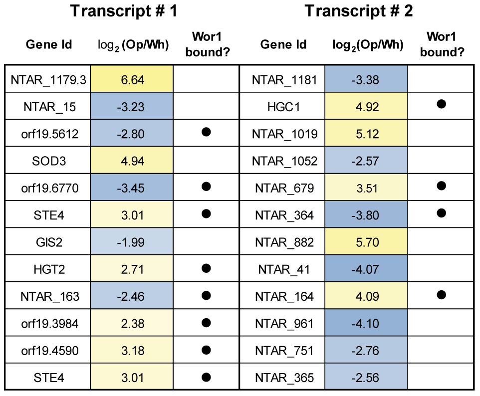 A selection of sense-antisense gene pairs with the most strongly anti-correlated expression.