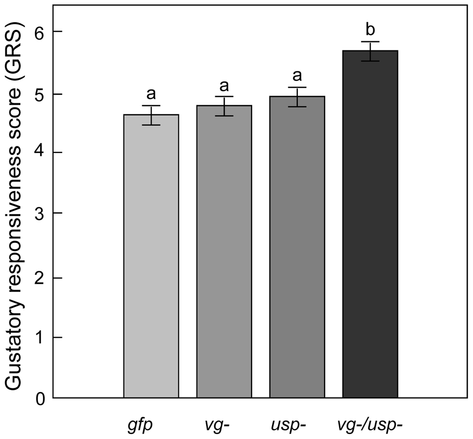 Gene knockdown effect on sucrose responsiveness in 7-day-old bees.