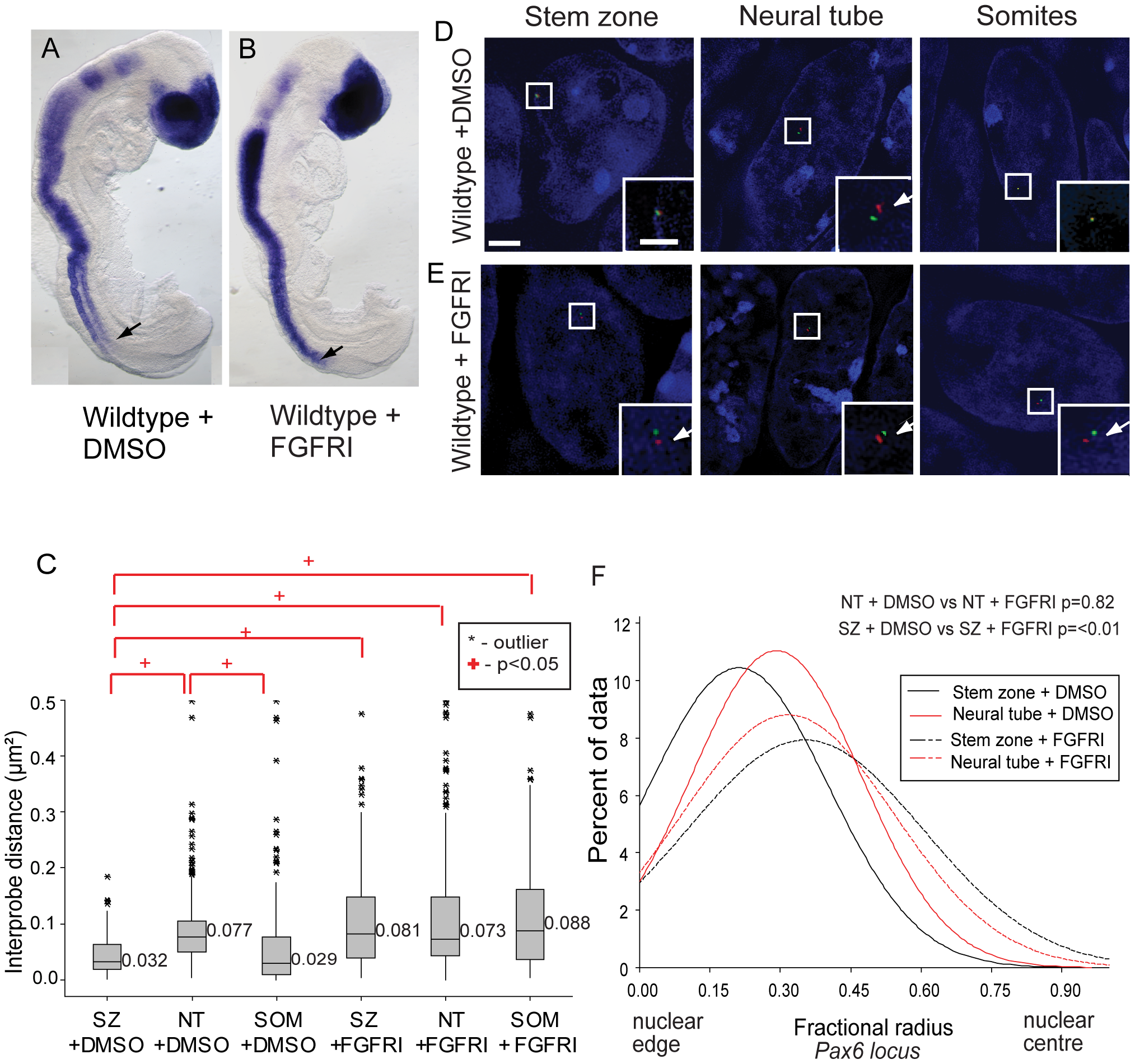 FGF signalling regulates chromatin compaction around <i>Pax6</i>.