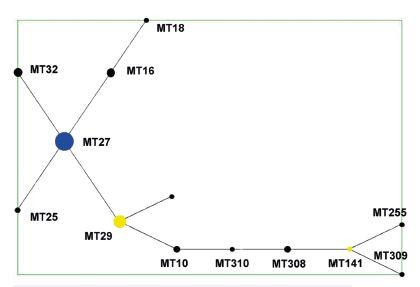 Diagram eBURST, MLVA analýza kmenů <i>B. pertussis,</i> ČR, 1967–2015 (červen)  Figure 1. eBURST diagram, MLVA analysis of <i>B. pertussis</i> strain collection, Czech Republic, 1967–2015 (June)