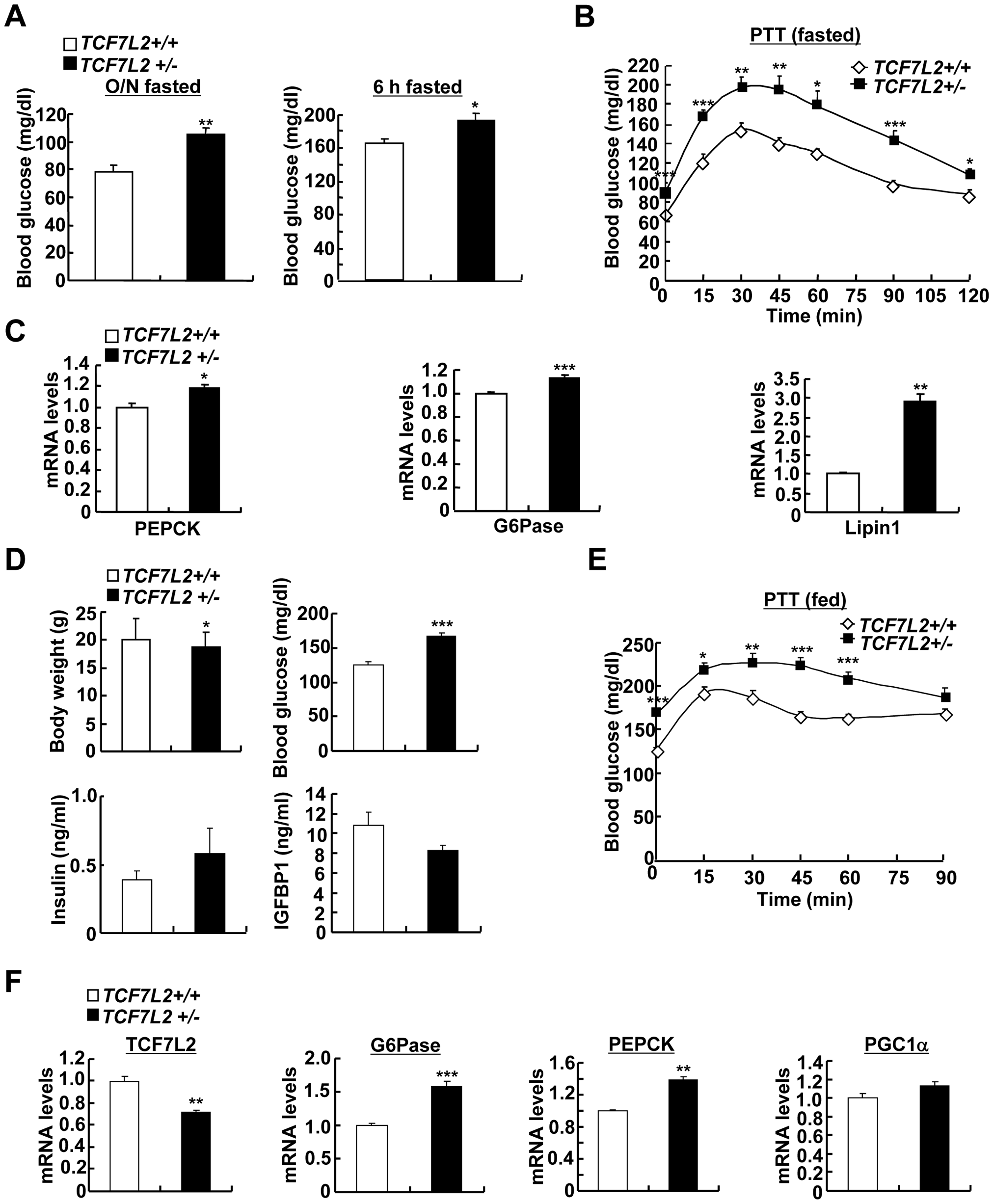 Chronic depletion of TCF7L2 promotes increased glucose production from the liver.