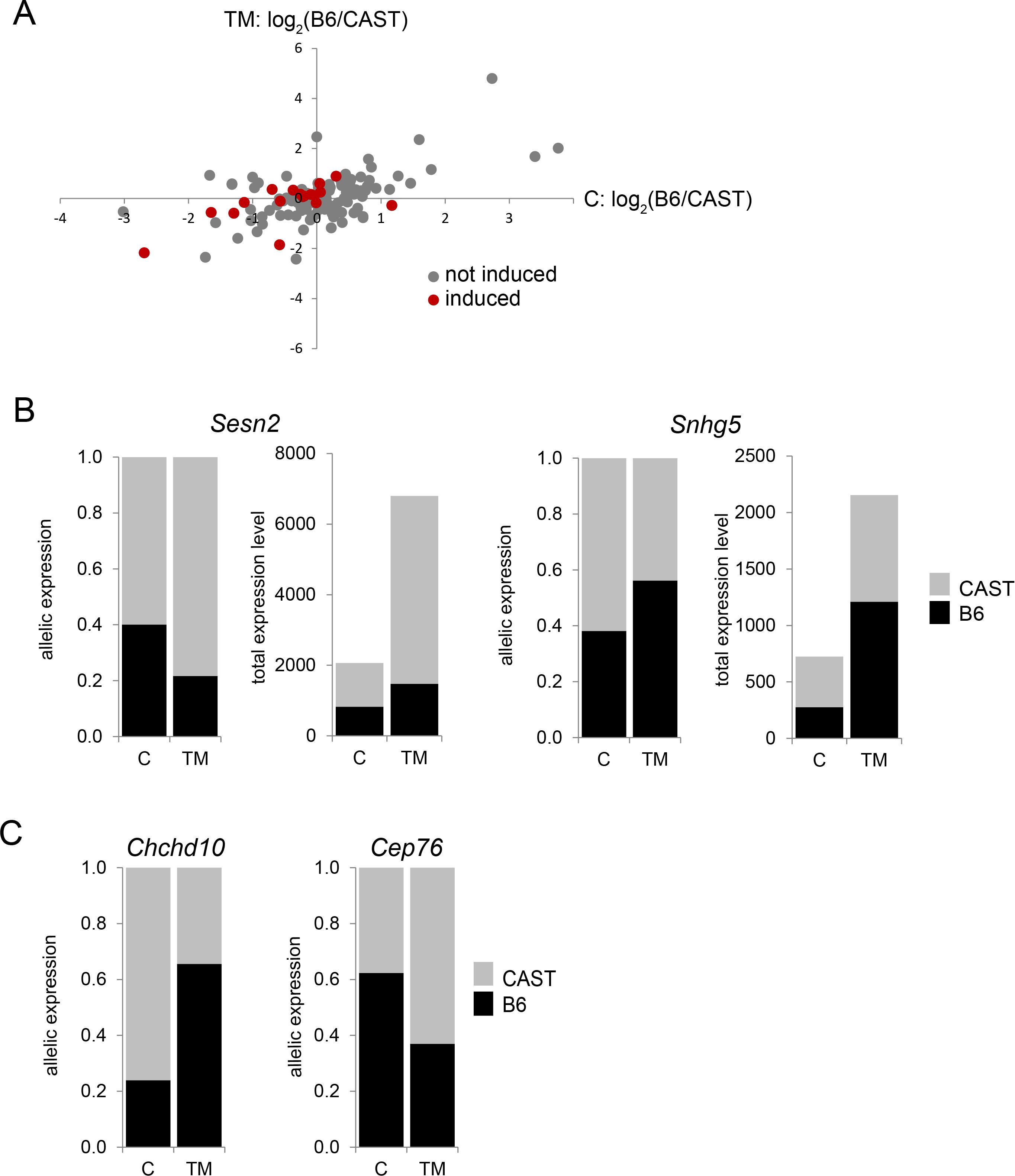 ER stress-induced allele-specific expression (ASE).