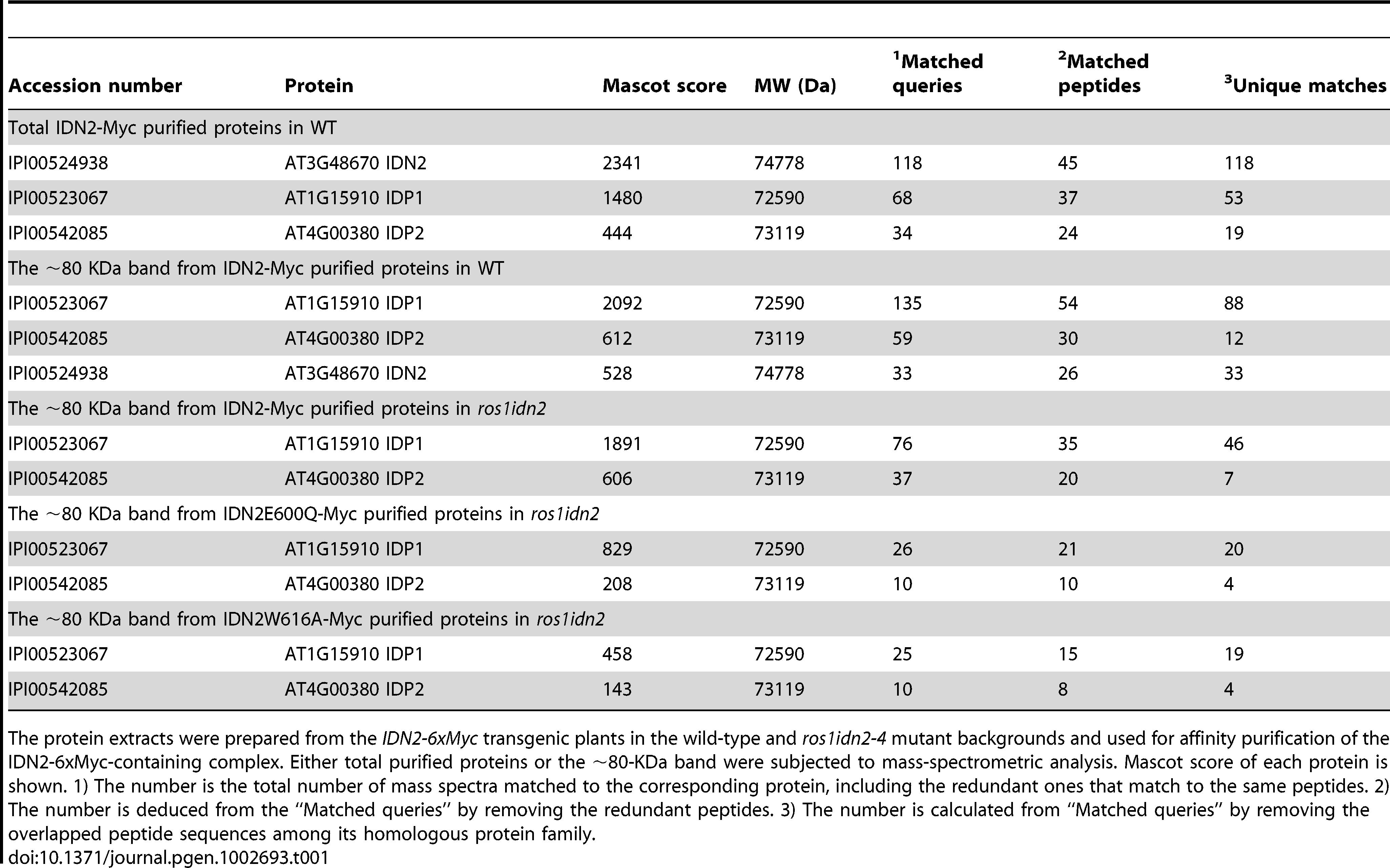 Mass-spectrometric analysis of IDN2-6xMyc affinity purification.