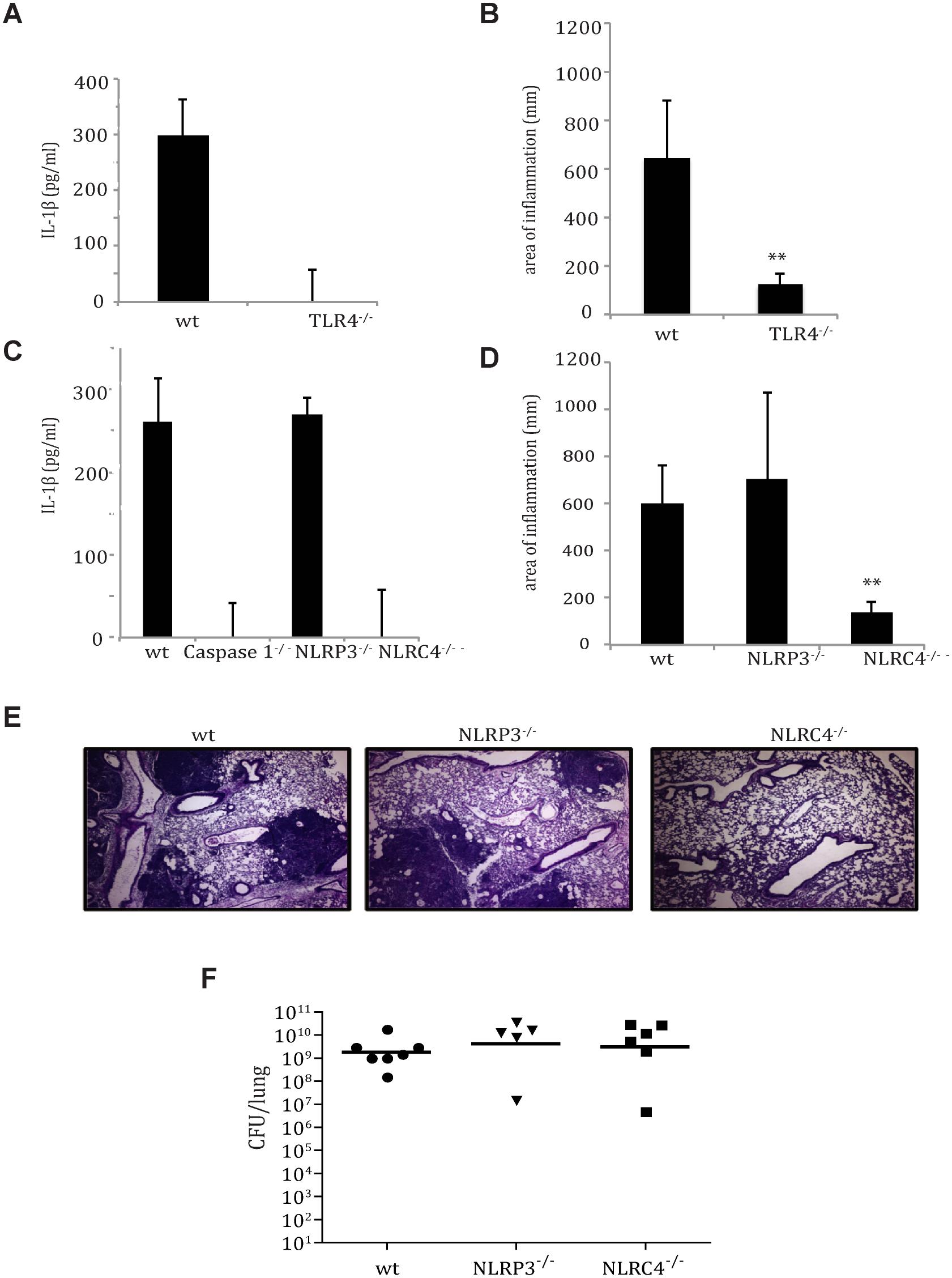 TLR4- and NLRC4-dependent IL-1β and IL-18 activation by <i>Y</i>. <i>pestis</i> contributes to respiratory pathology.