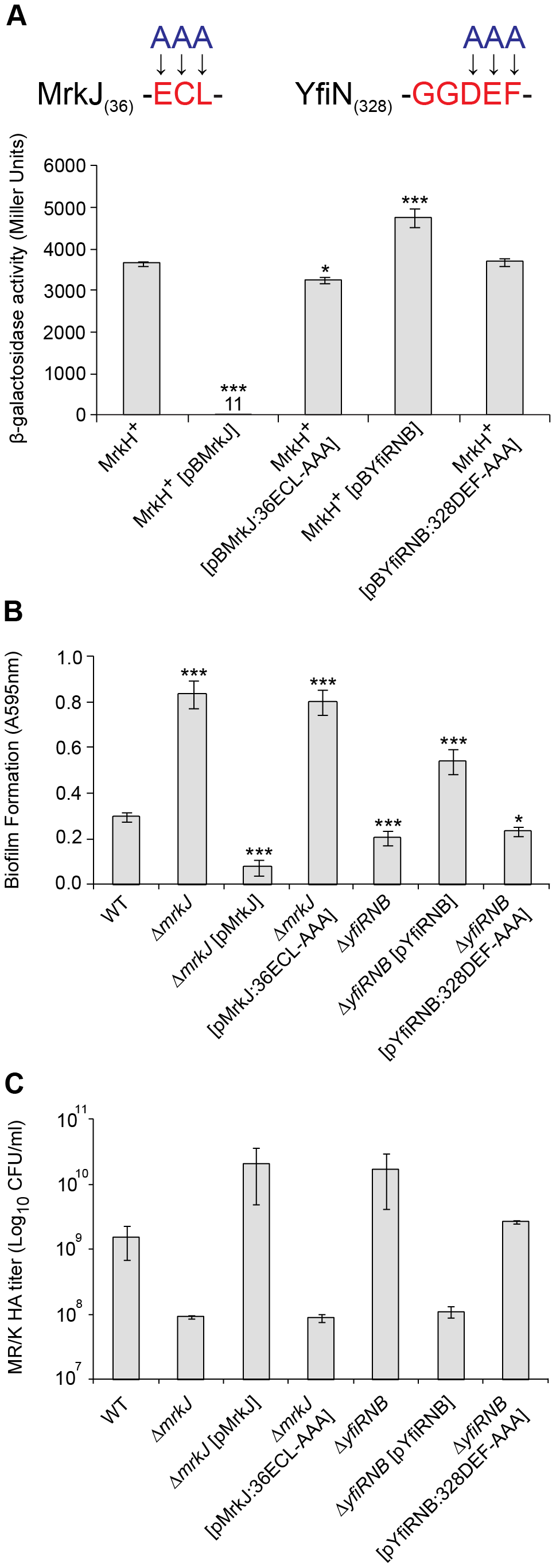 Analysis of EAL- and GGDEF-domain mutations on MrkH-mediated transcriptional activation, biofilm formation and type 3 fimbriae expression.