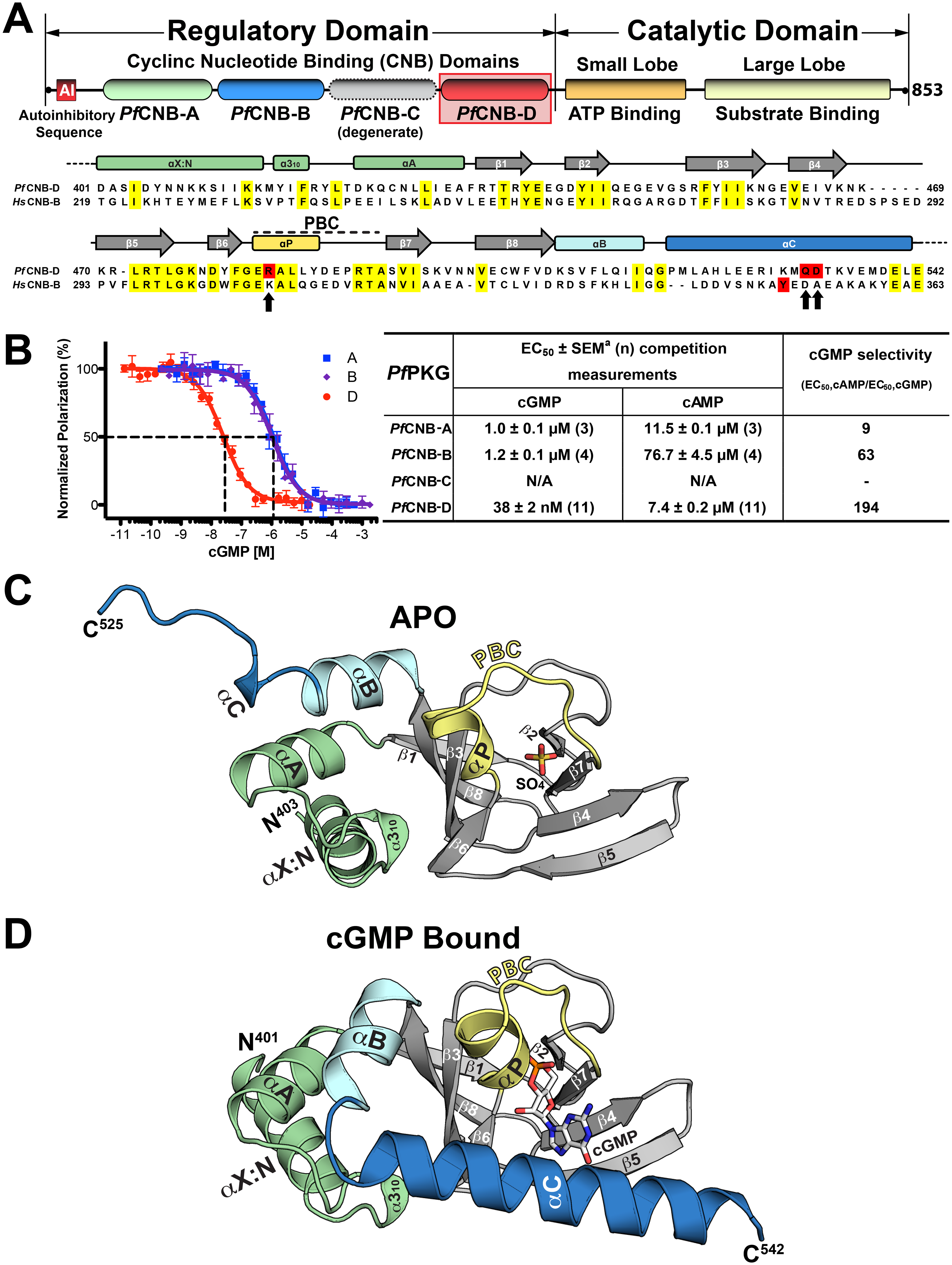 Domain organization and overall structures of <i>Pf</i>CNB-D.