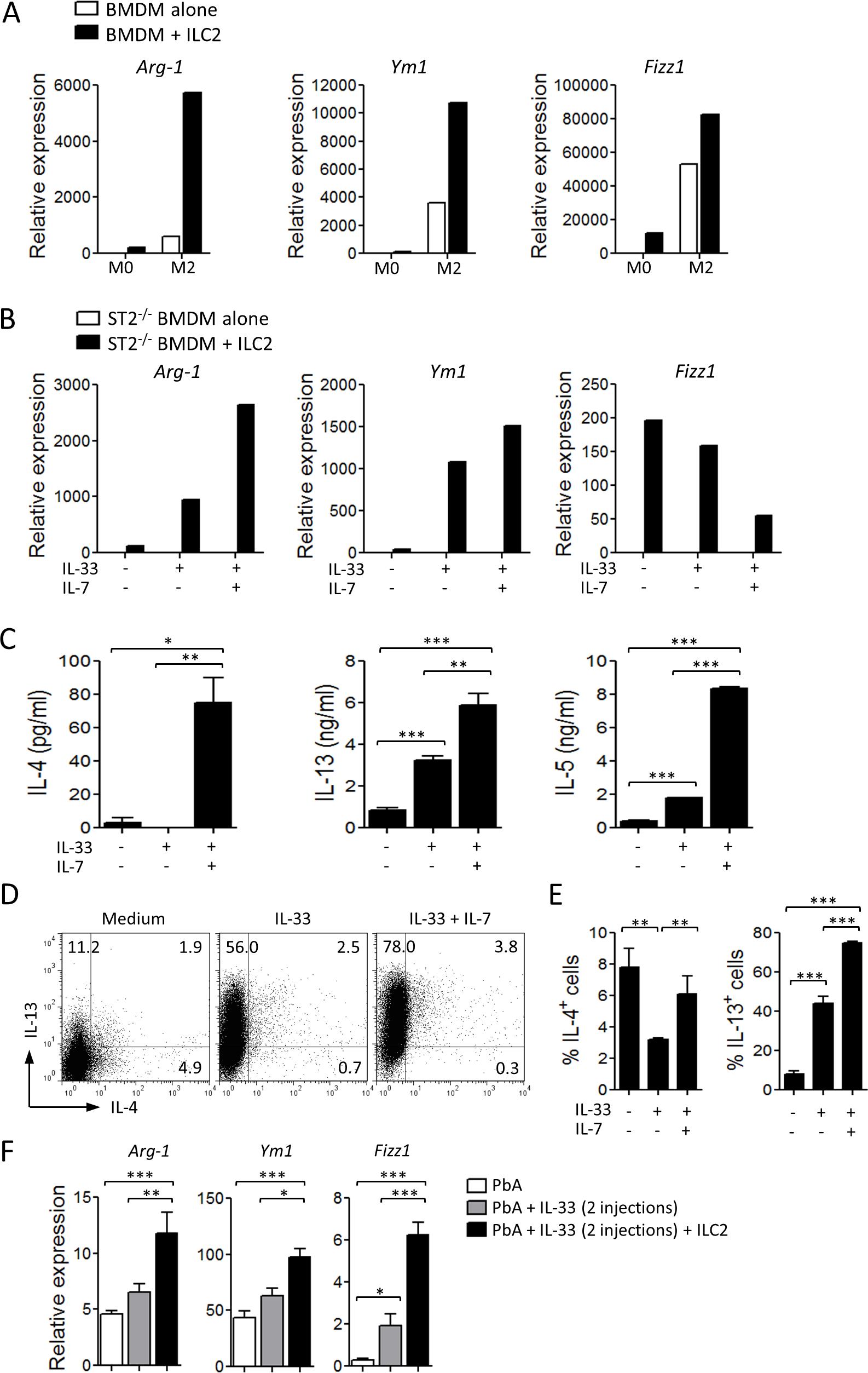 ILC2 promote M2 macrophage polarization.