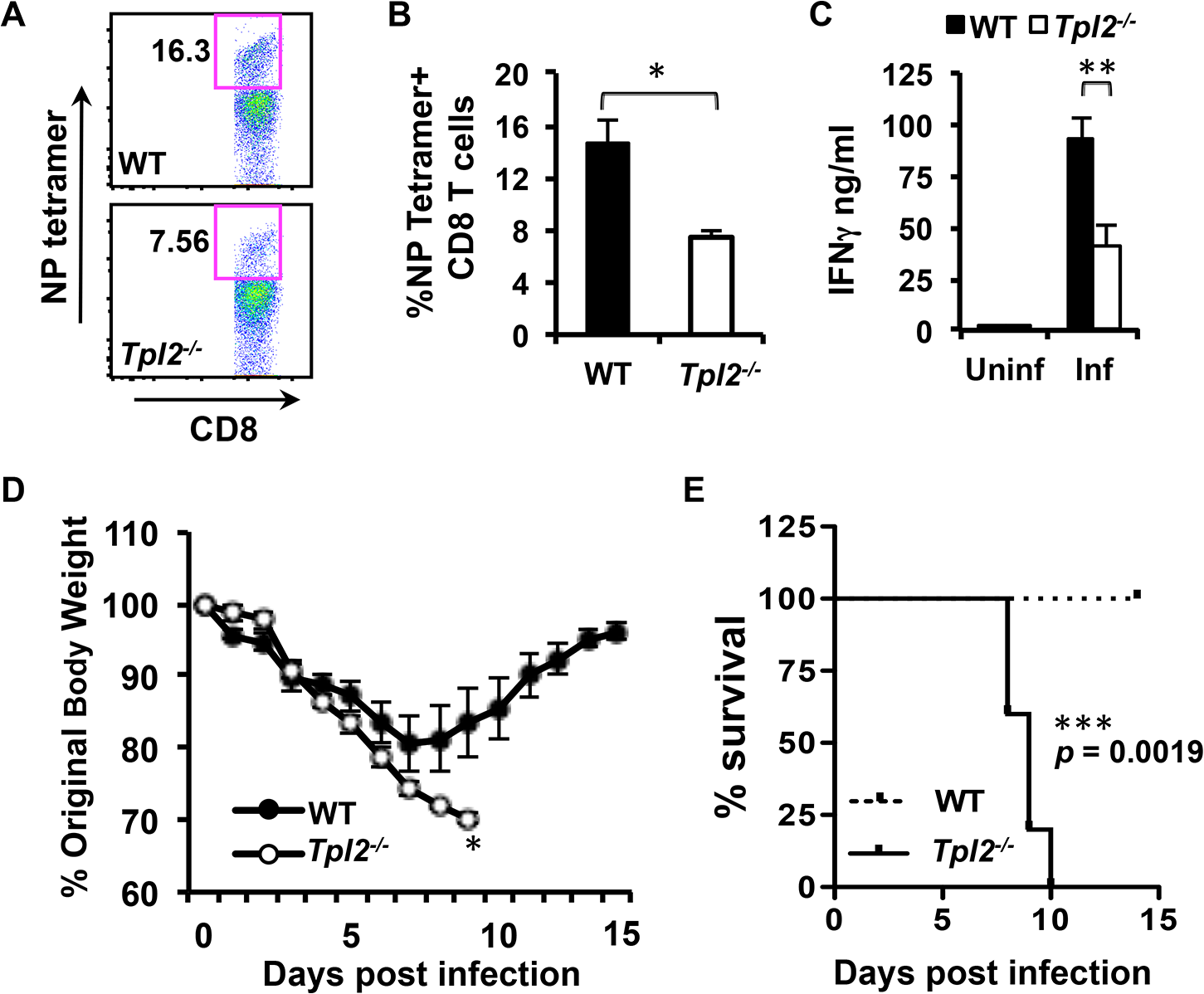 Tpl2 ablation limits antigen-specific CD8<sup>+</sup> T cell responses and enhances susceptibility to influenza infection.