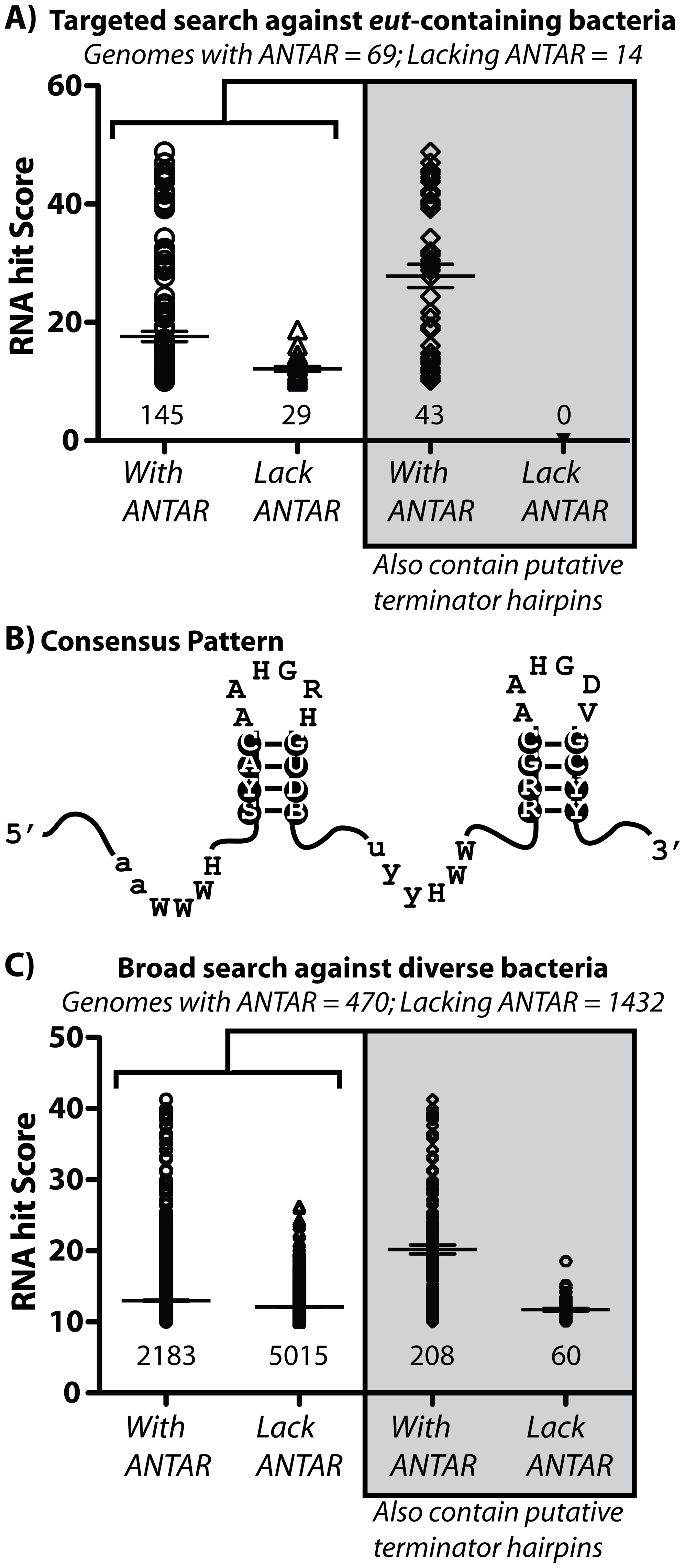 Bioinformatic analysis of the ANTAR domain and its two stem-loop RNA substrate.