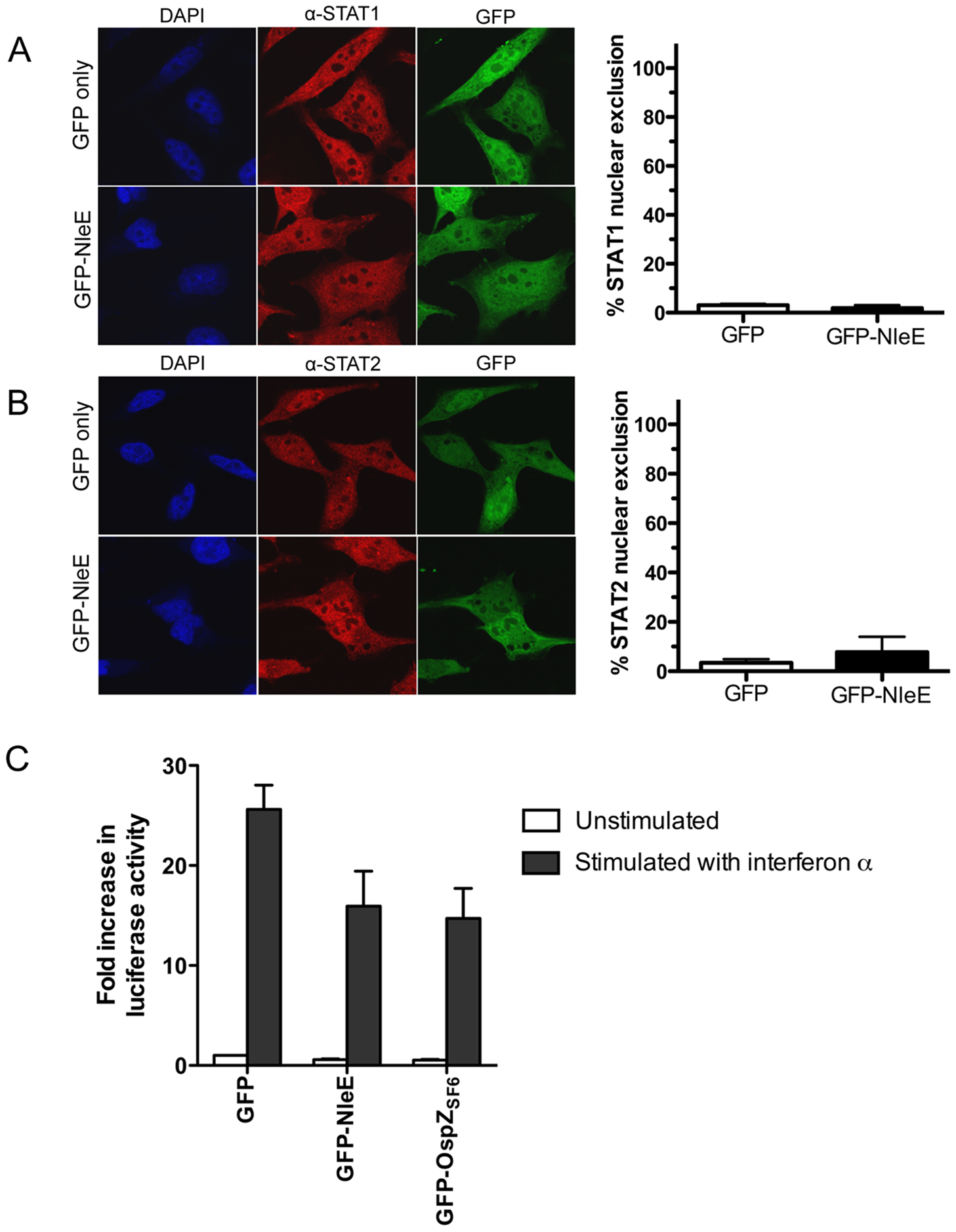 Effect of NleE on nuclear translocation of STAT1 and STAT2.