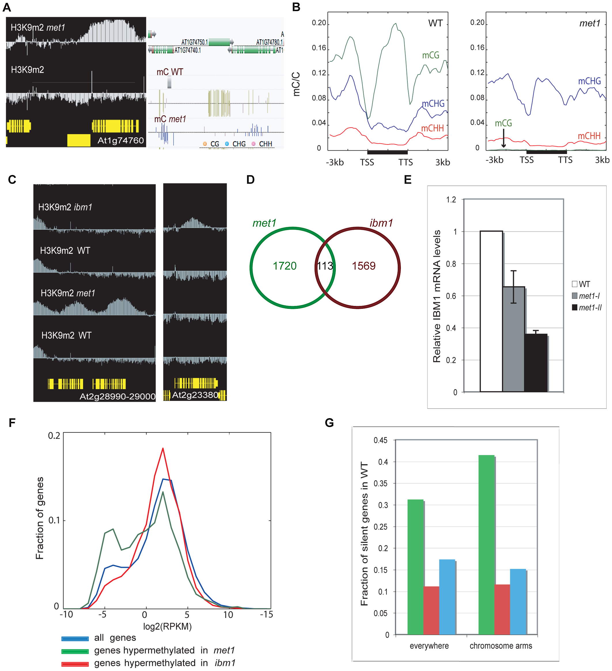 Genome-wide comparison of H3K9 hypermethylated genes in <i>met1</i> and <i>ibm1</i> mutants.