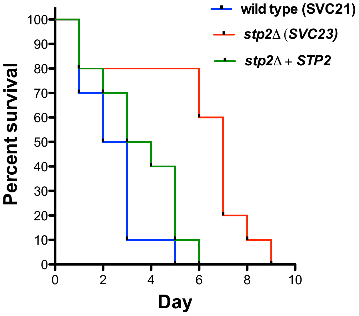 Mutation in <i>C. albicans STP2</i> causes attenuation of virulence.