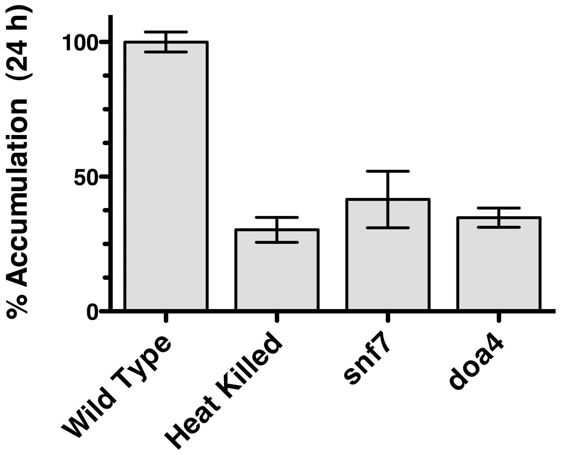 [<sup>3</sup>H]-FLC import in <i>S. cerevisiae</i> mutants.