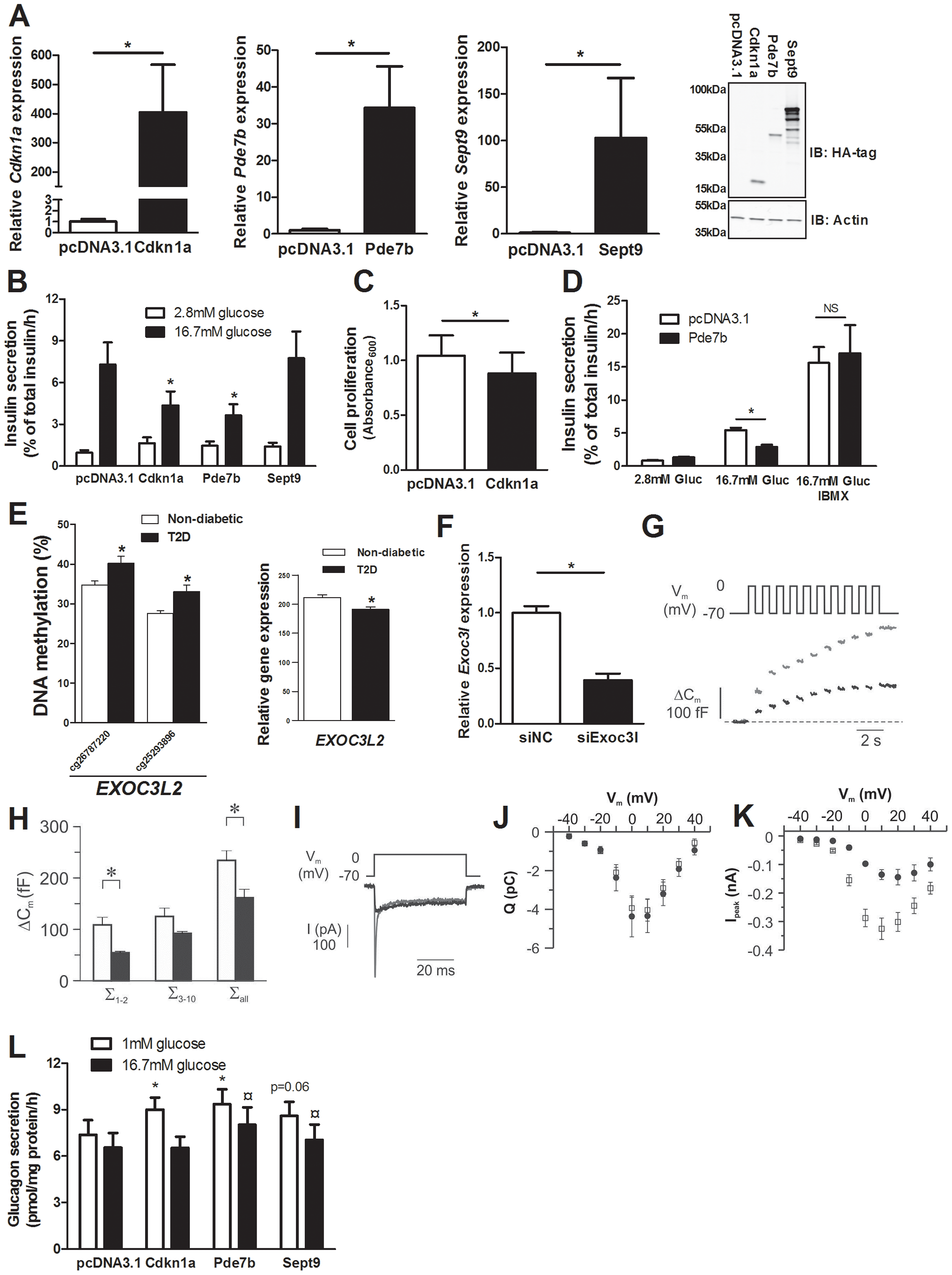 Impact of Cdkn1a, Pde7b, Sept9 and Exoc3l on clonal β- and α-cells.