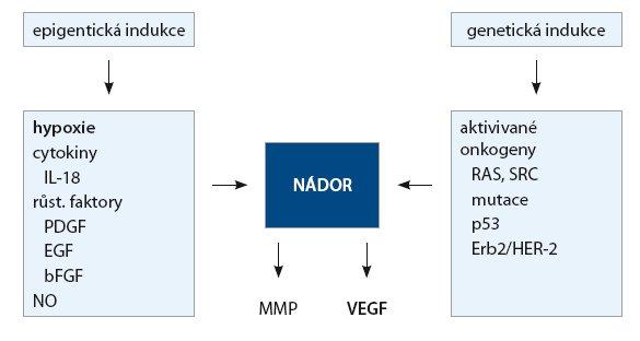 Indukce angiogenních faktorů.