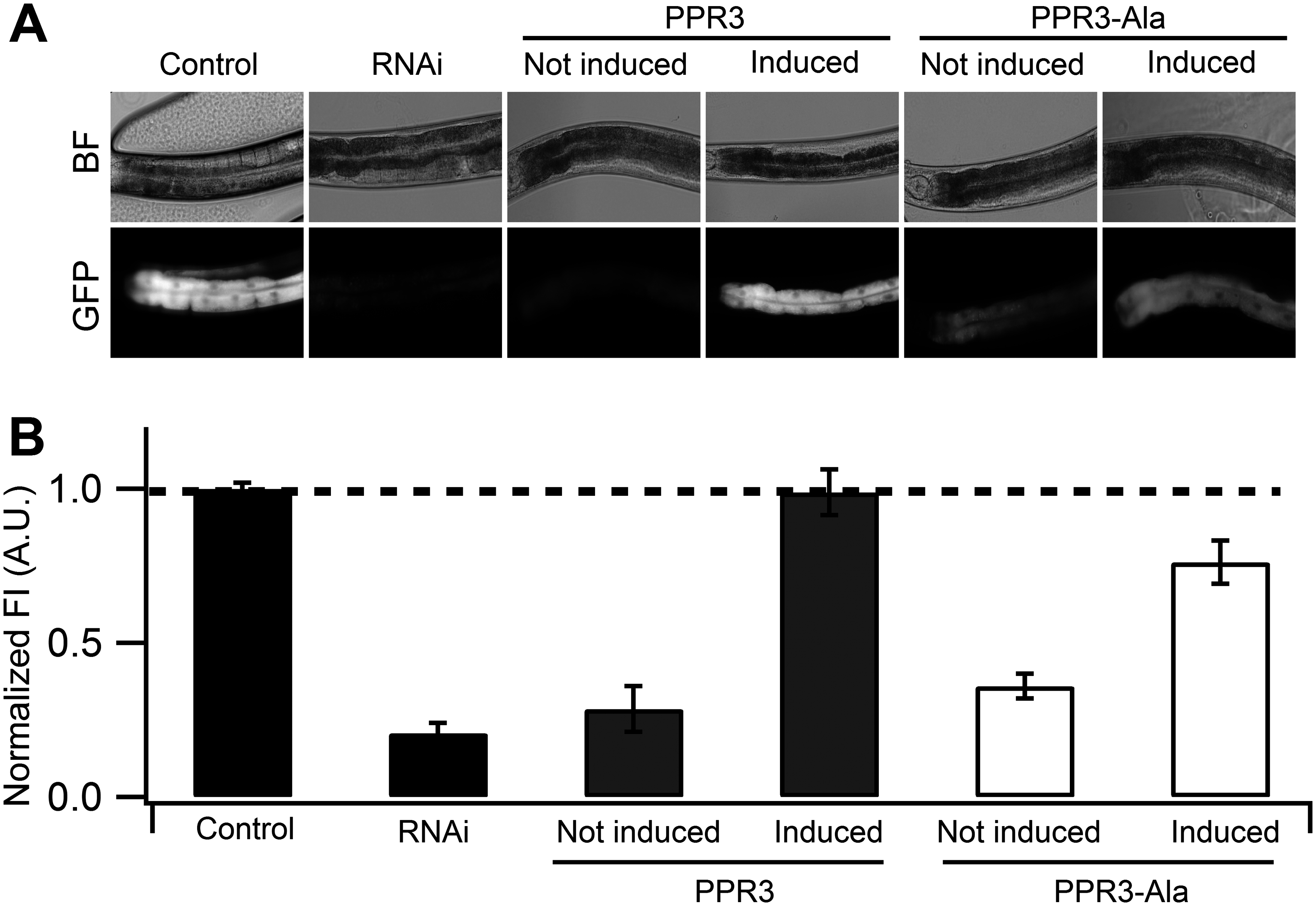 Suppression of RNAi in <i>C</i>. <i>elegans</i> by PPR3 and PPR3-Ala.