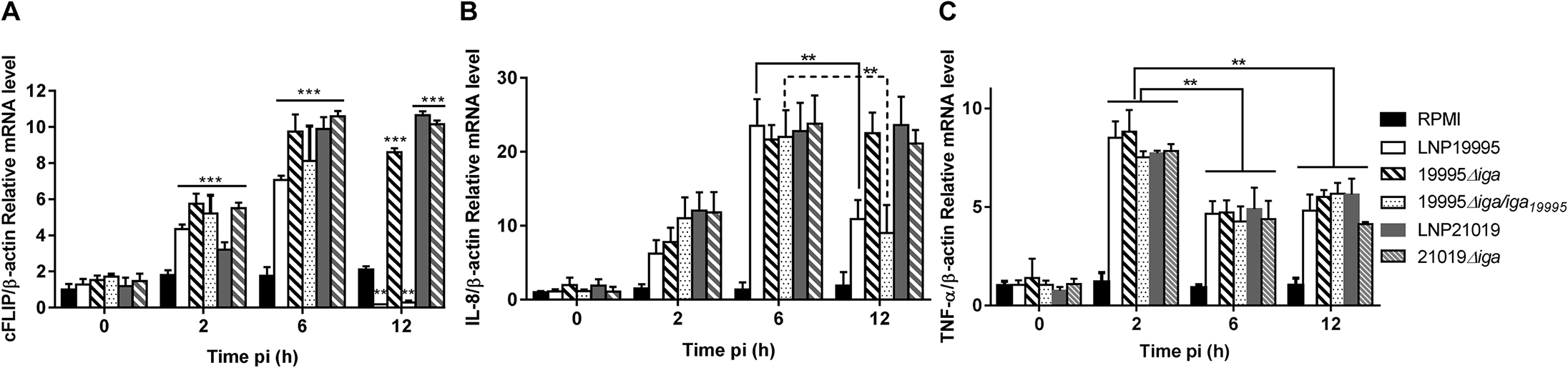 ST-11 IgA protease-mediated nuclear cleavage of p65/RelA alters selectively expression of NF-κB responsive genes.