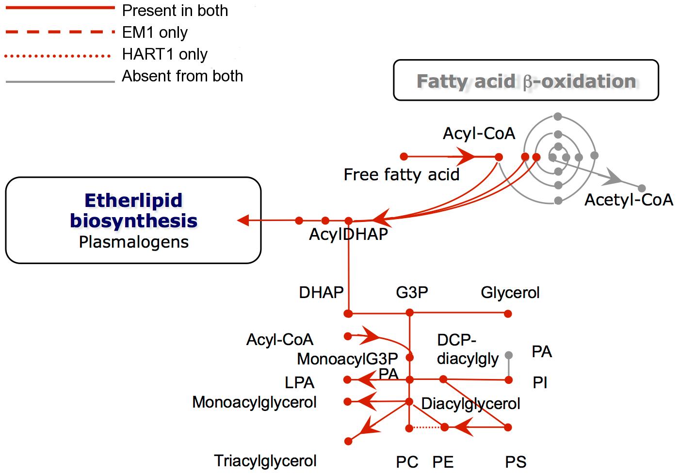 Phospholipid metabolism in <i>Phytomonas</i> EM1 and HART1.