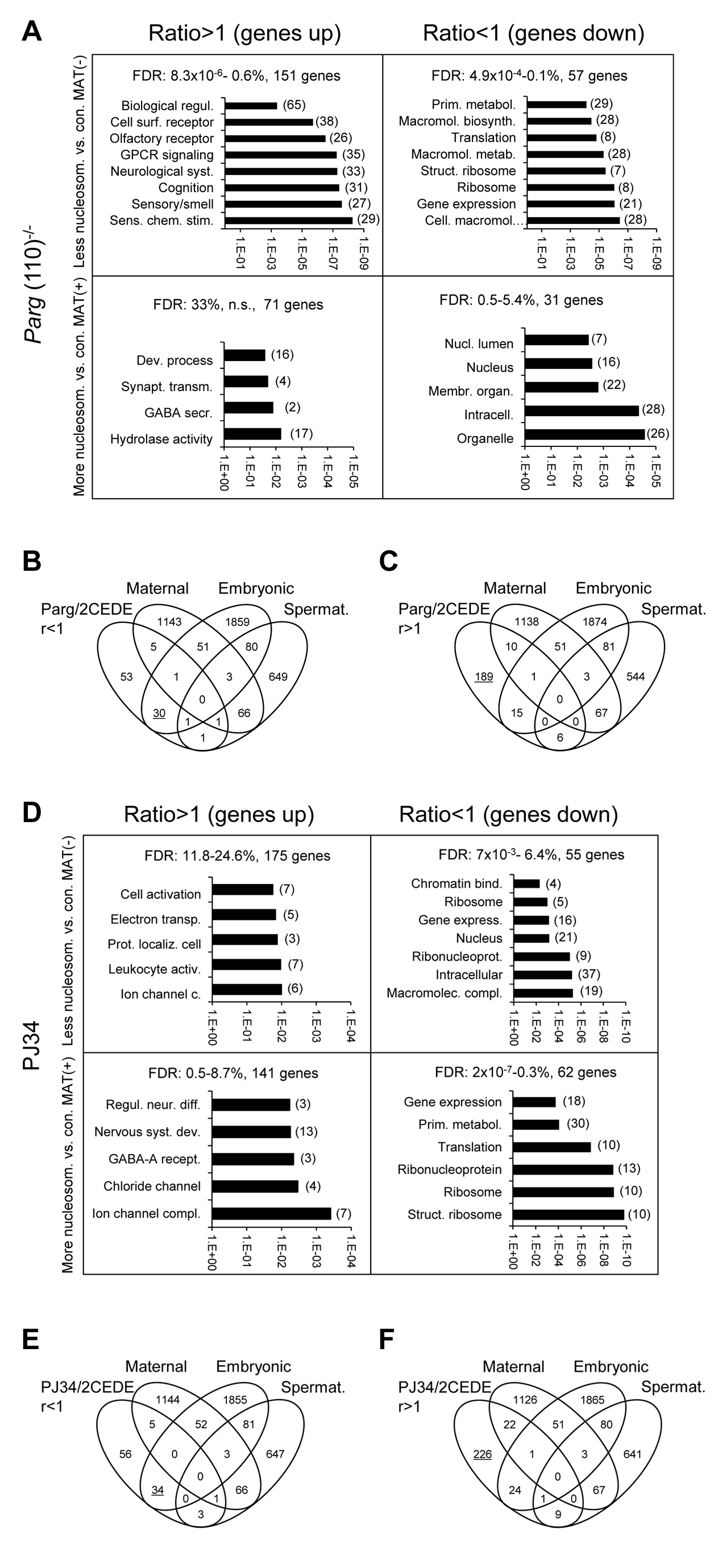Genes that are affected by altered sperm histone association and differential gene expression in 2-cell embryo progeny in the <i>Parg</i>(110)<sup>−/−</sup> (A, B, C) and PJ34-treated (D, E, F) mouse models share some common functional relevance.