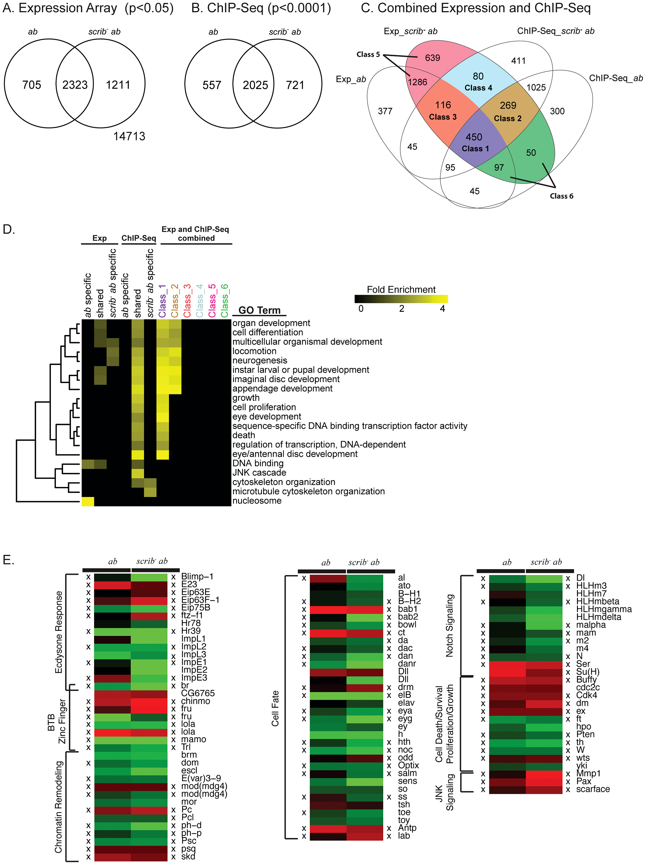 Potential tumourigenic targets of Ab identified from expression array and ChIP-Seq analysis.