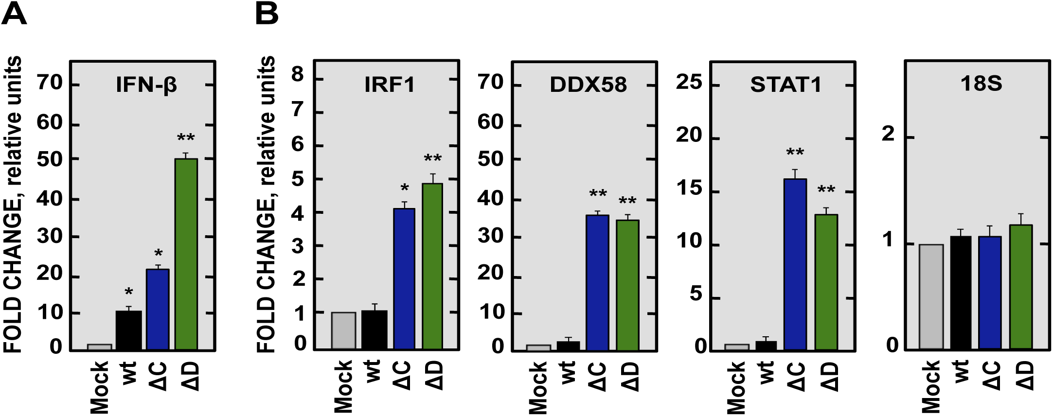 Expression of IFN-β and ISGs in SARS-CoV-nsp1* attenuated mutants infected cells.