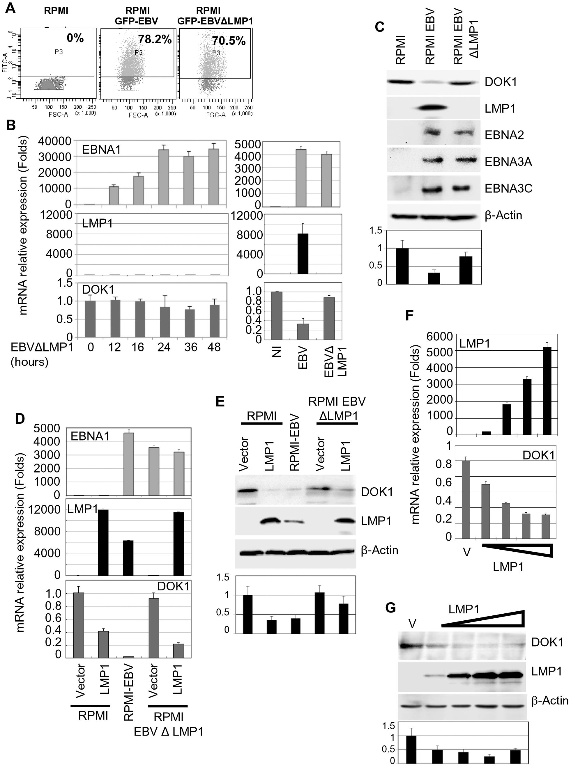 LMP1 plays a key role in EBV-mediated <i>DOK1</i> silencing.