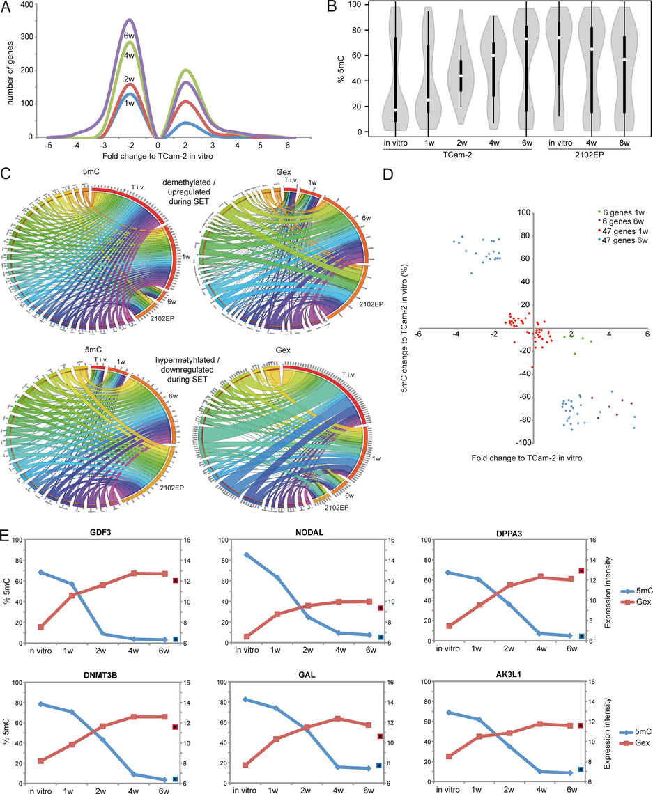 Detailed analyses of Gex and 5mC dynamics during reprogramming of TCam-2 cells.