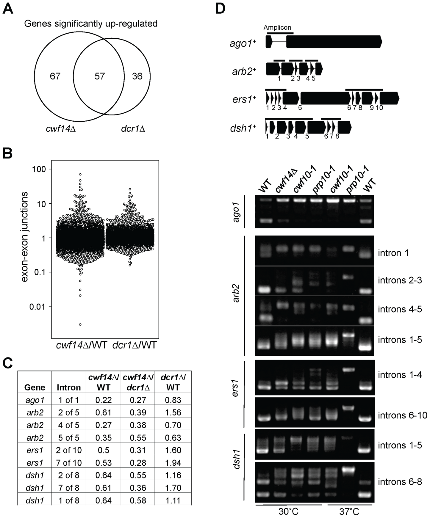 Cwf14 is required for the proper splicing of RNAi factors.